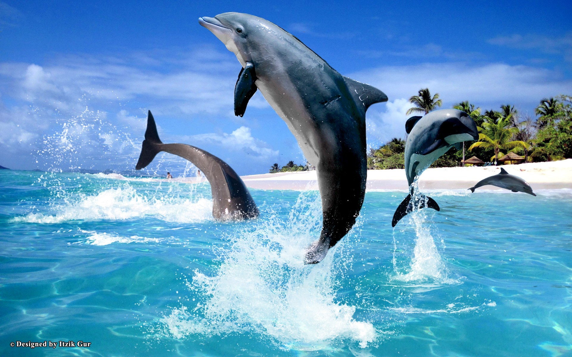 1920x1200 ... free miami dolphins wallpaper screensavers wallpapersafari .