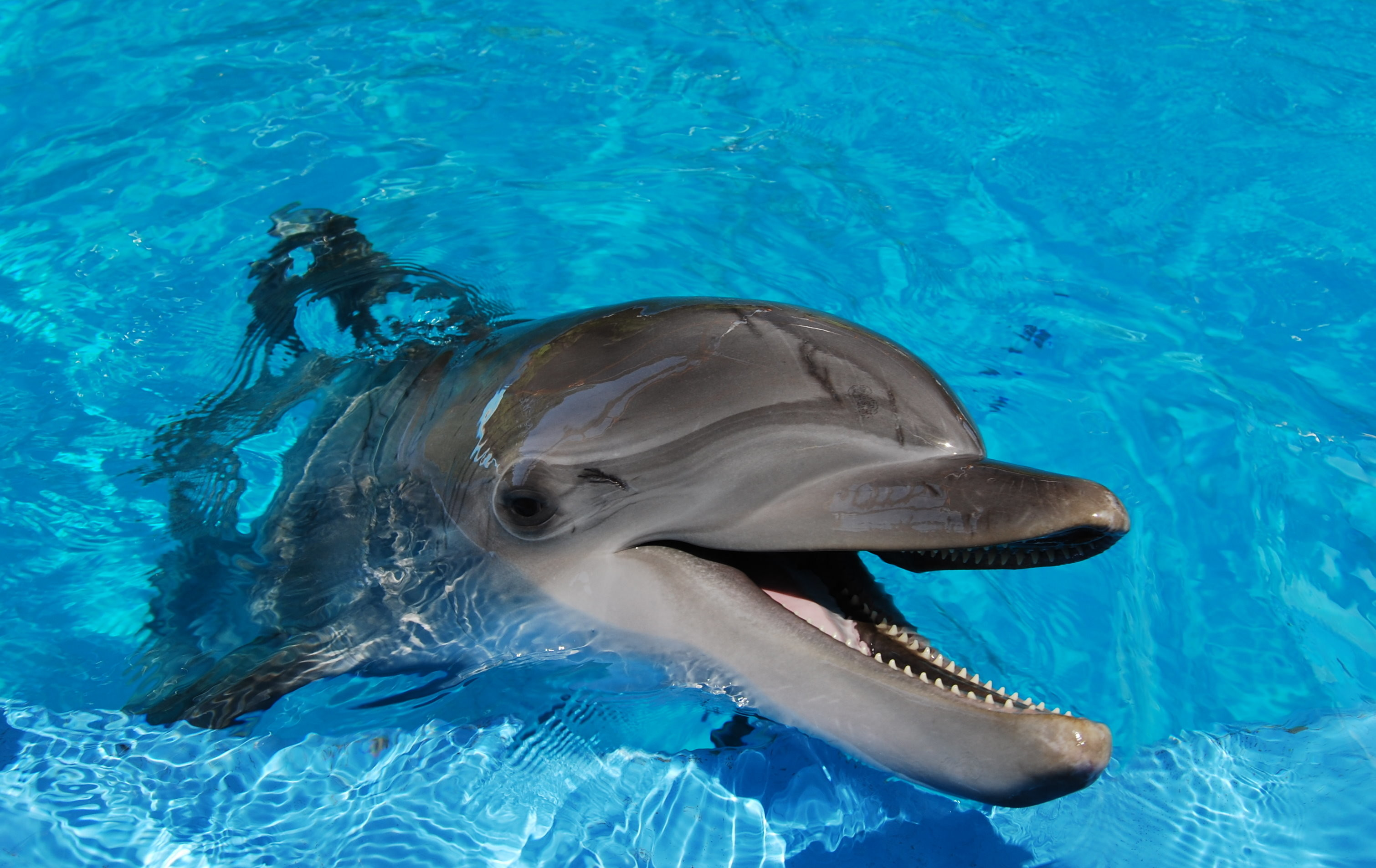 Dolphin Wallpapers 69 Images