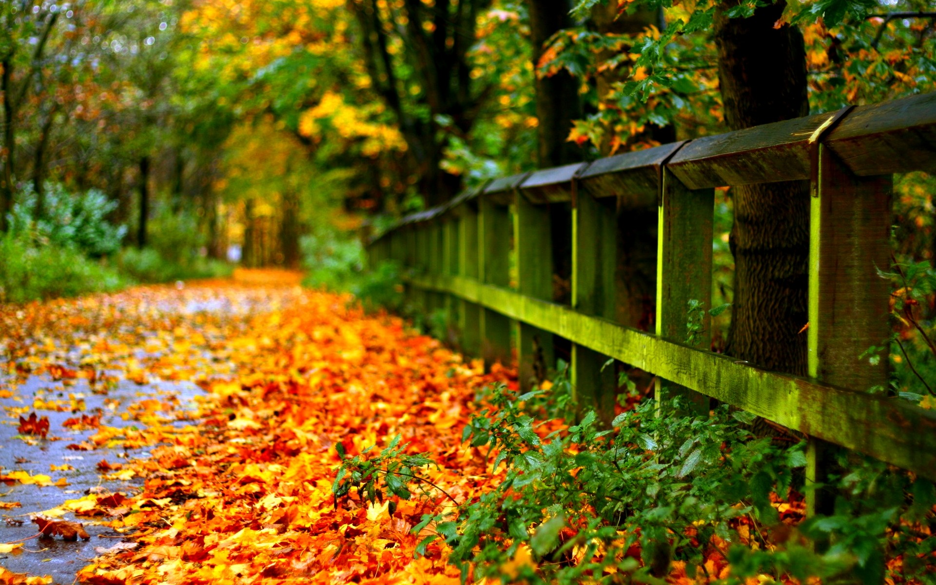 1920x1200 Autumn Leaves on Road Wallpaper