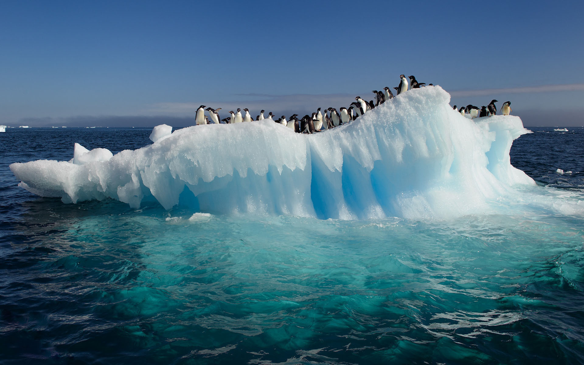 1920x1200 HD Awesome View Of Nature Penguins On Ice In Antarctica Ocean Best Desktop  High Resolution Wallpapers Of Ocean Ice