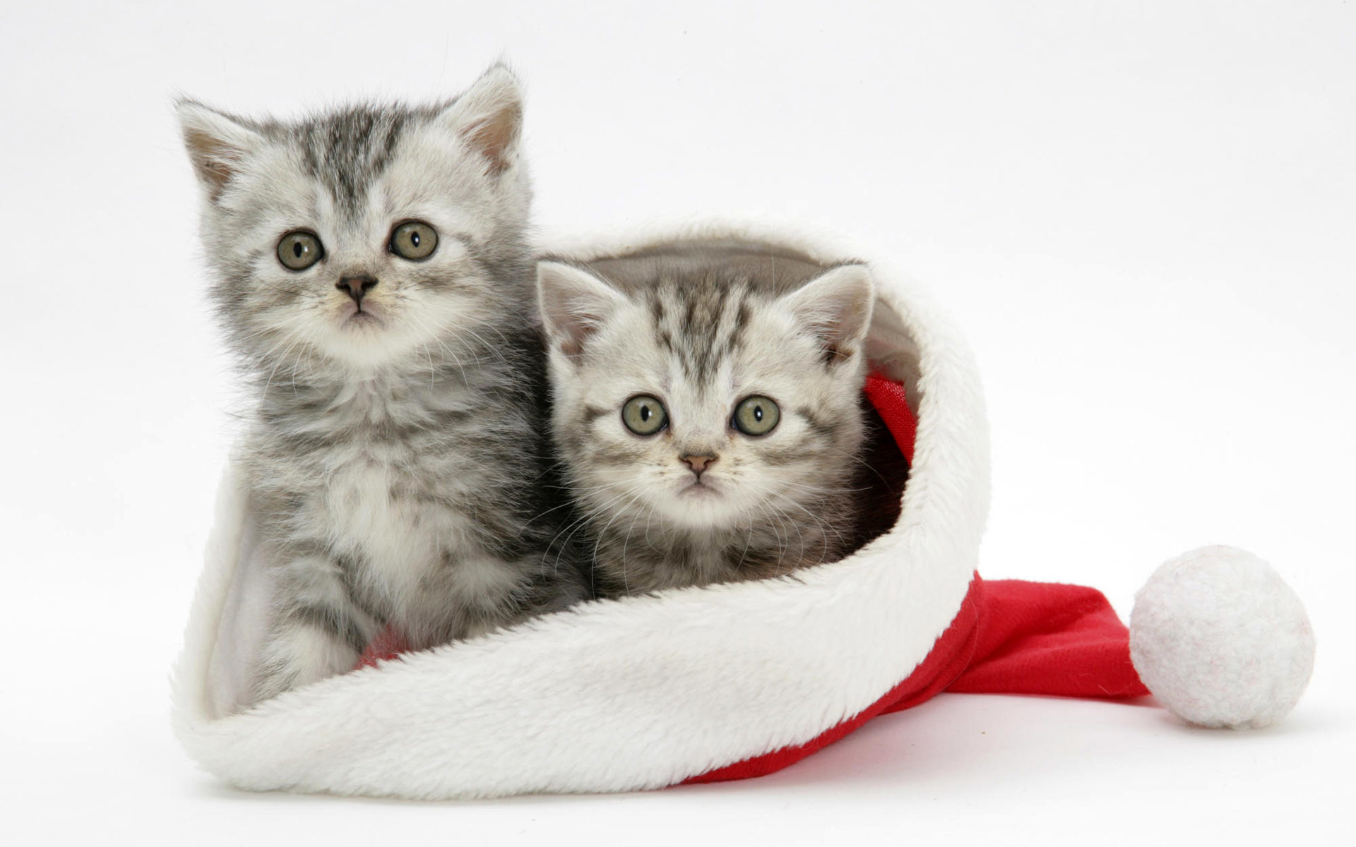 1920x1200 White-Cats-Christmas-Wallpaper-For-Android.jpg (1920×1200) | Wallpapers |  Pinterest | Wallpaper, Mobile wallpaper and Desktop backgrounds