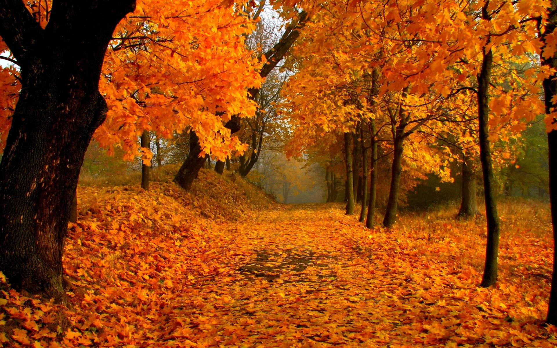 fall leaves wallpaper (73+ images)