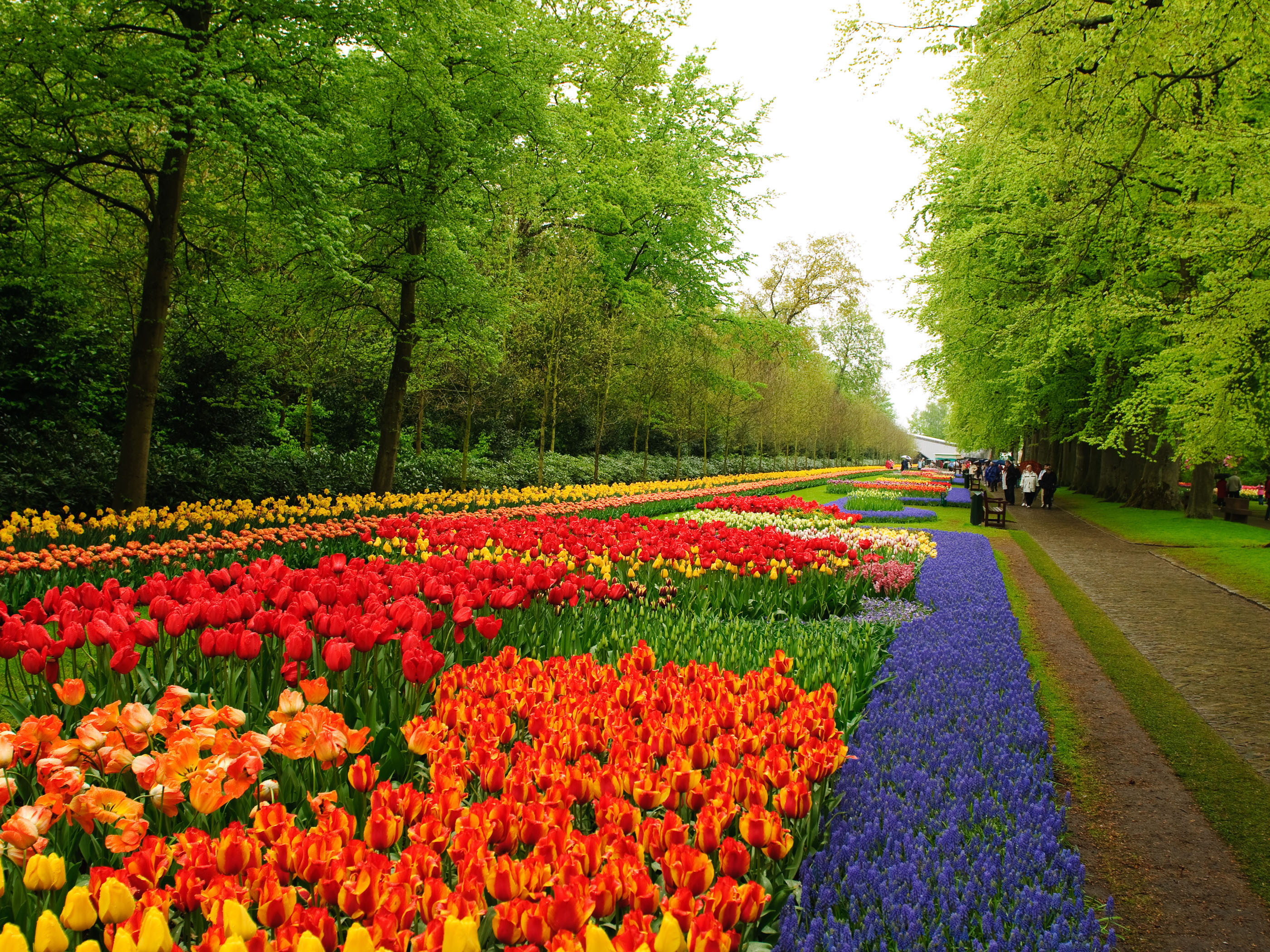 2800x2100 flower gardens pictures | Niederlande Keukenhof Flower Garden wallpapers