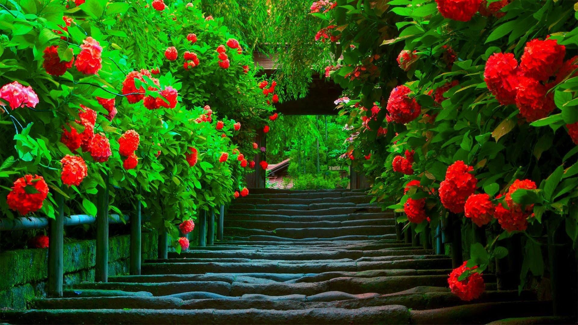 Beautiful Wallpapers for Desktop Full Screen 55 images