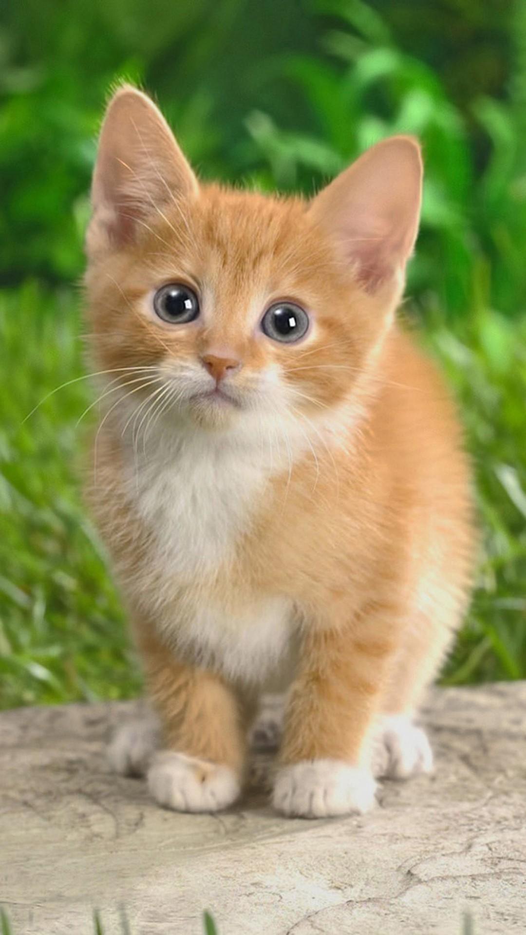 xpx Funny Kittens Wallpaper