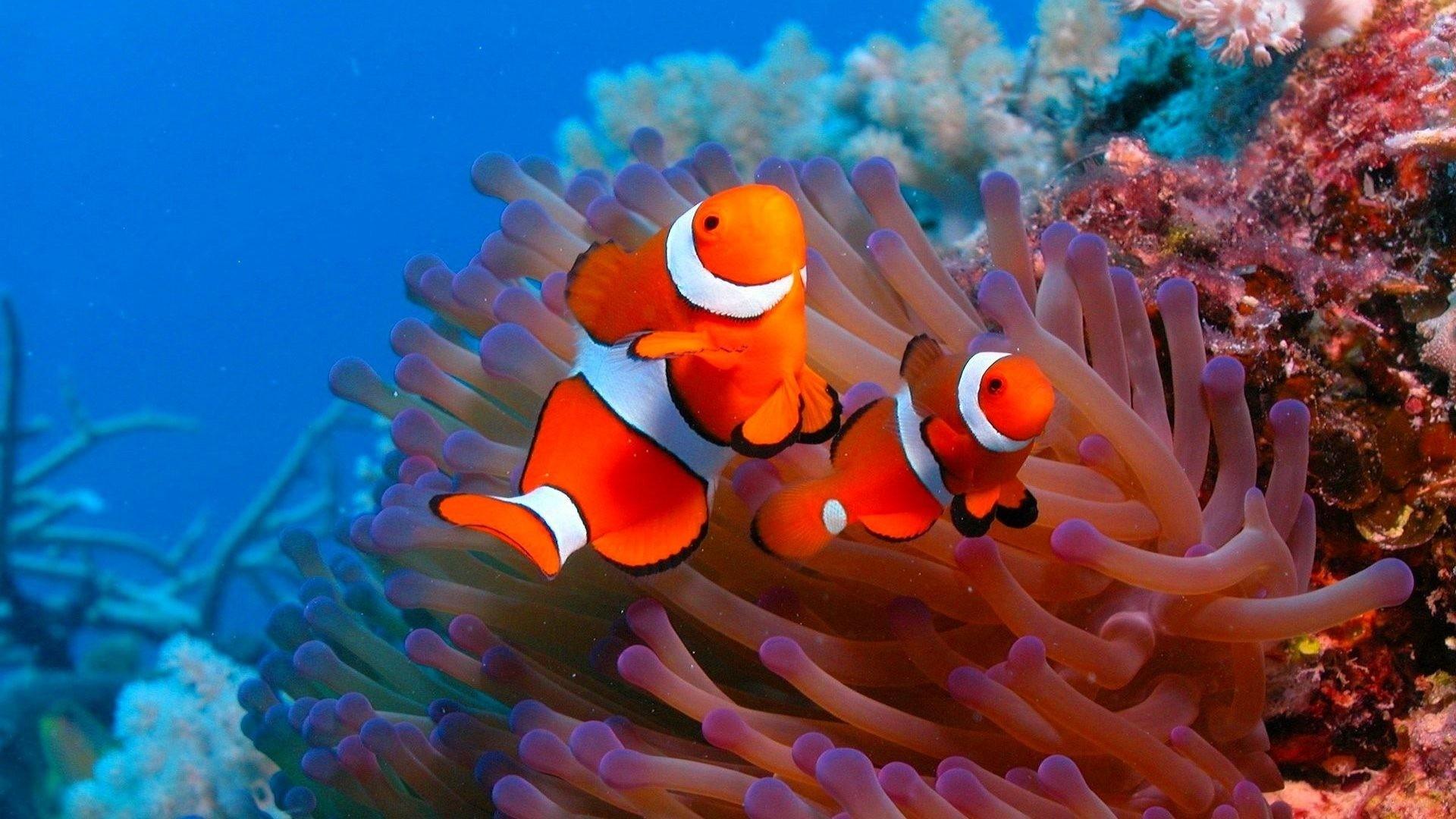 HD Ocean Sea Life Wallpapers (47+ images)