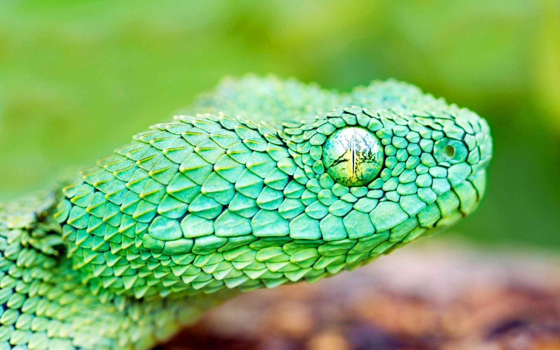 Cool Snake Wallpapers (65+ Images