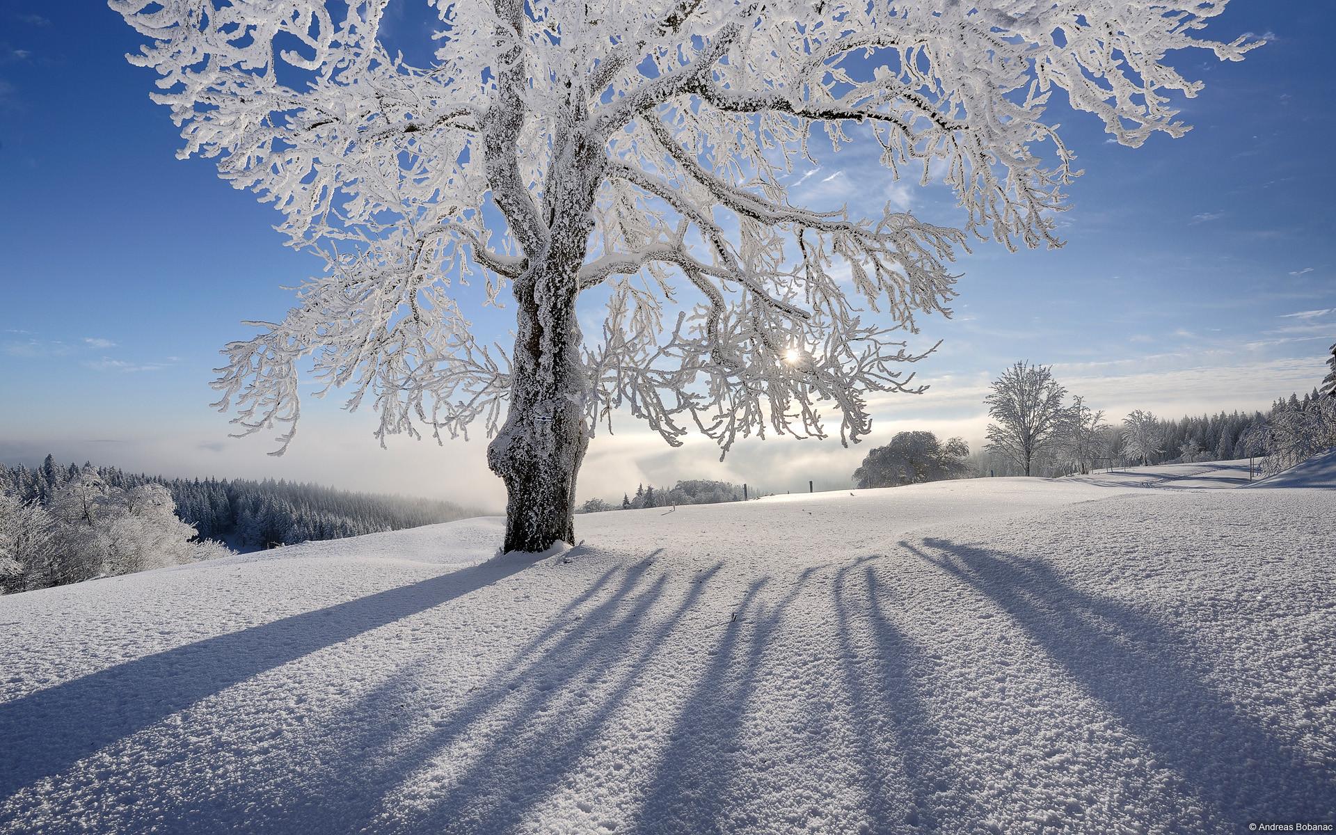 Winter snow scenes wallpaper 49 images 1920x1080 1080p snow scenes vol2 no13 19201080 picrolls free wallpaper voltagebd Choice Image