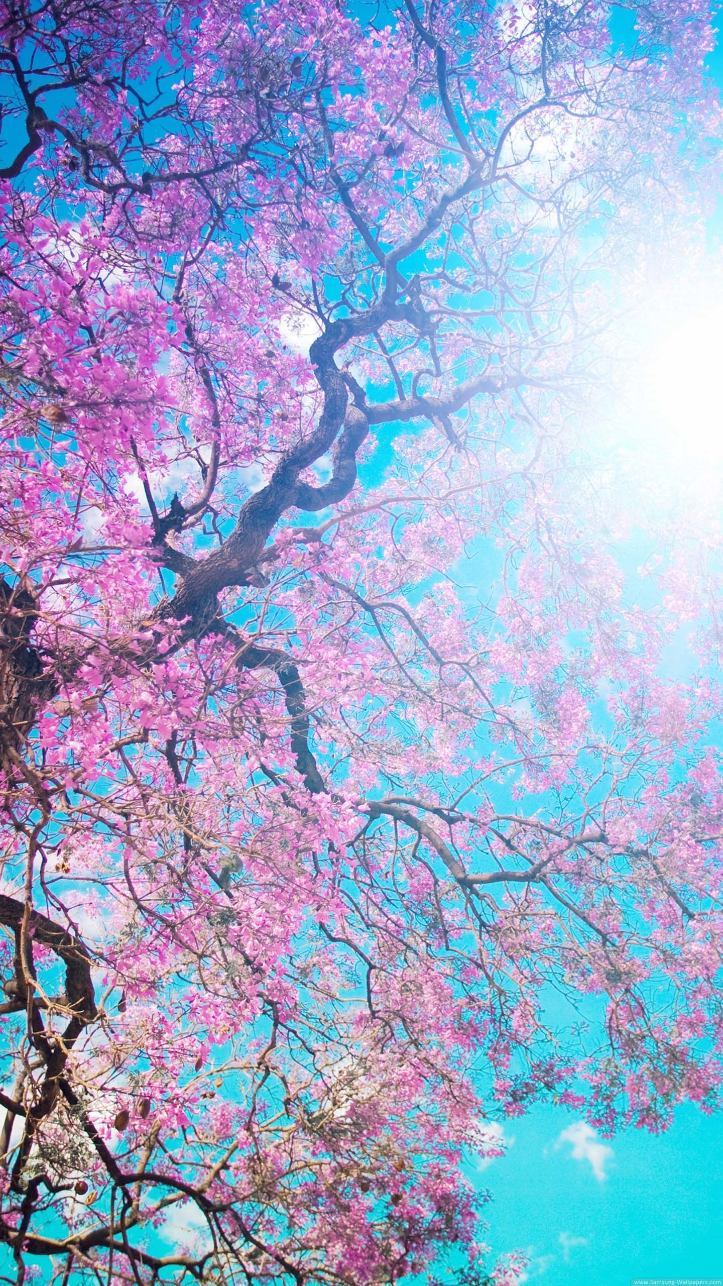 Spring Screen Wallpaper (52+ images)