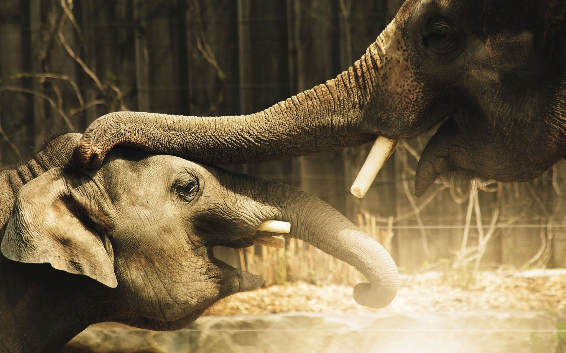 Elephant Screensavers And Wallpaper (69+ Images