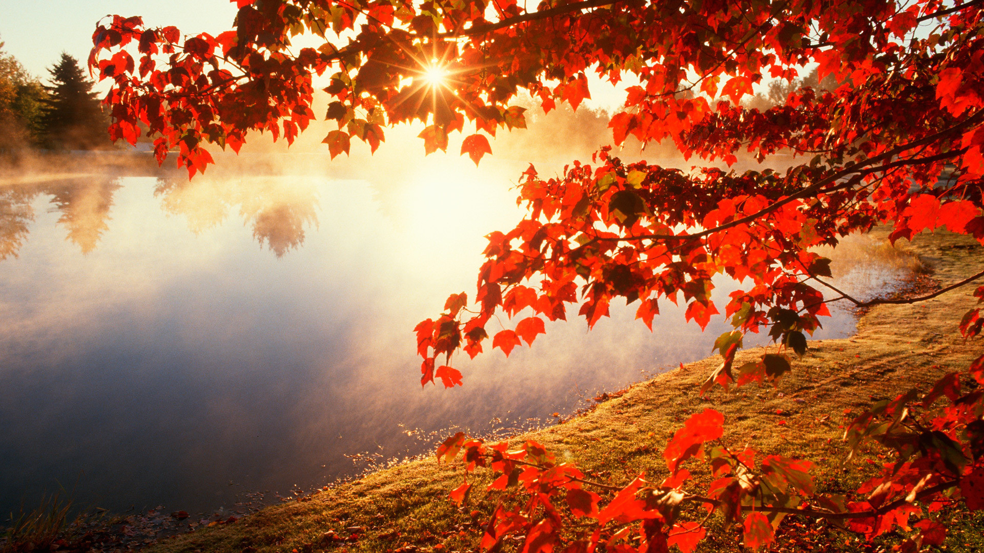 1920x1080 Widescreen Fall Wallpapers Full HD Desktop Wallpapers  px 944.55 KB