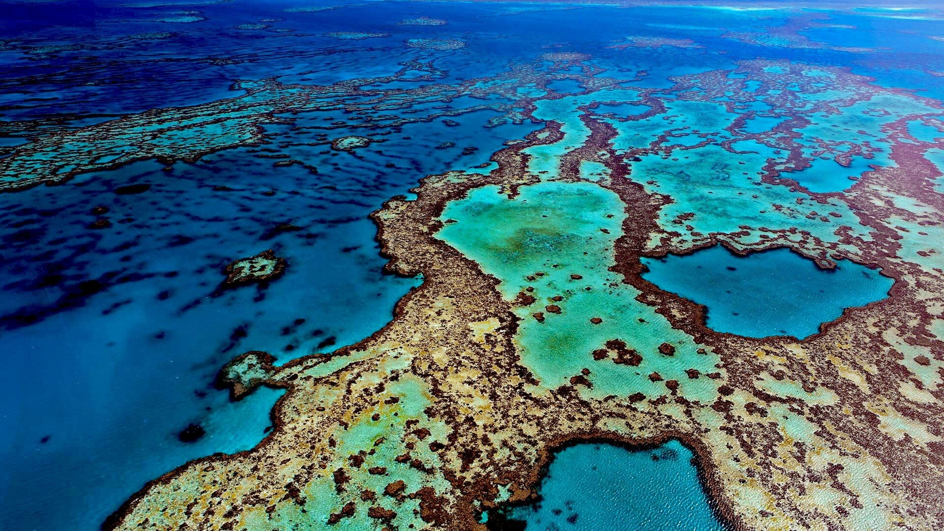 1920x1080 A part Of The Great Barrier Reef. The most beautiful place in the world.
