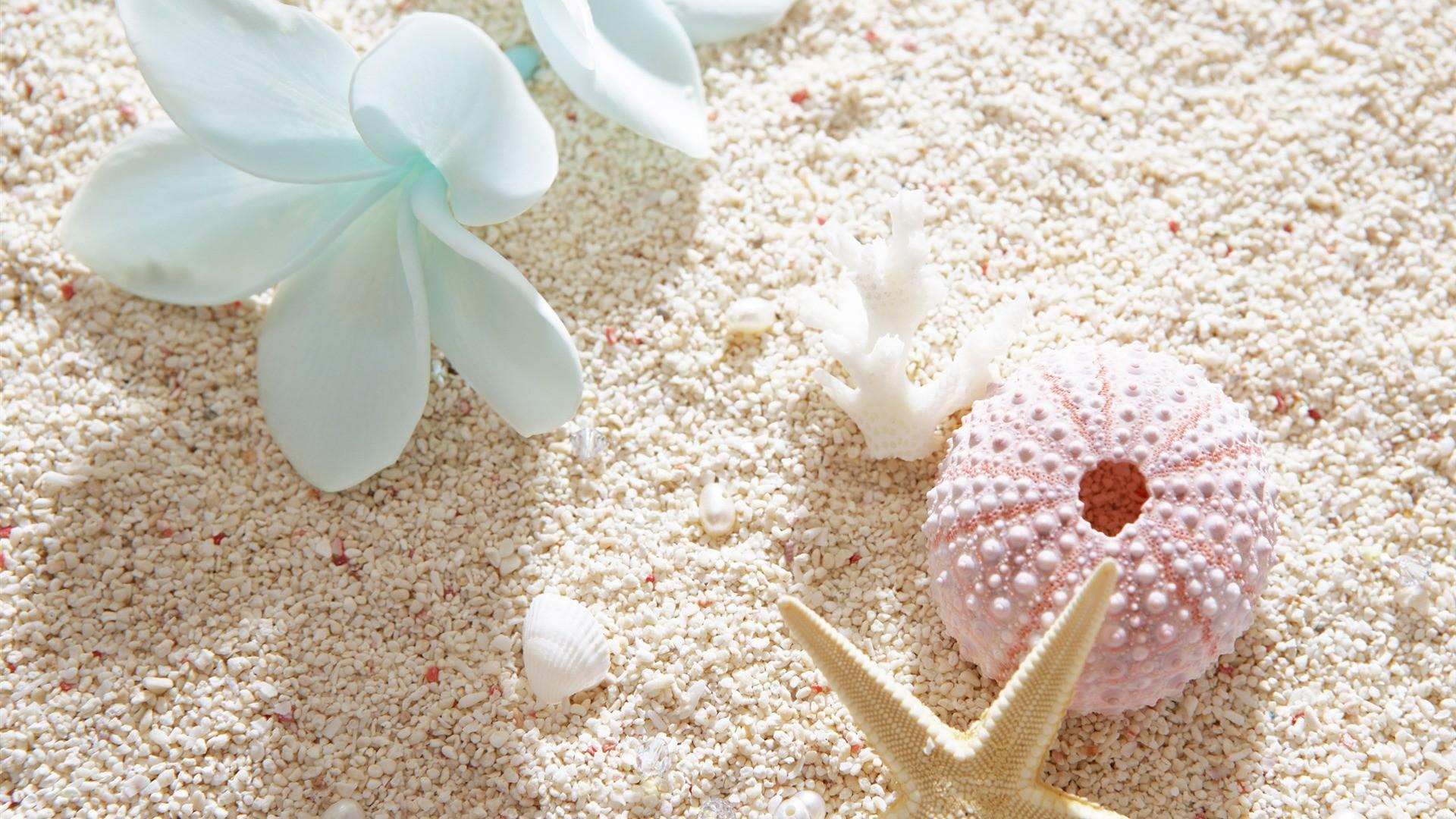 Seashell Desktop Wallpaper (54+ Images