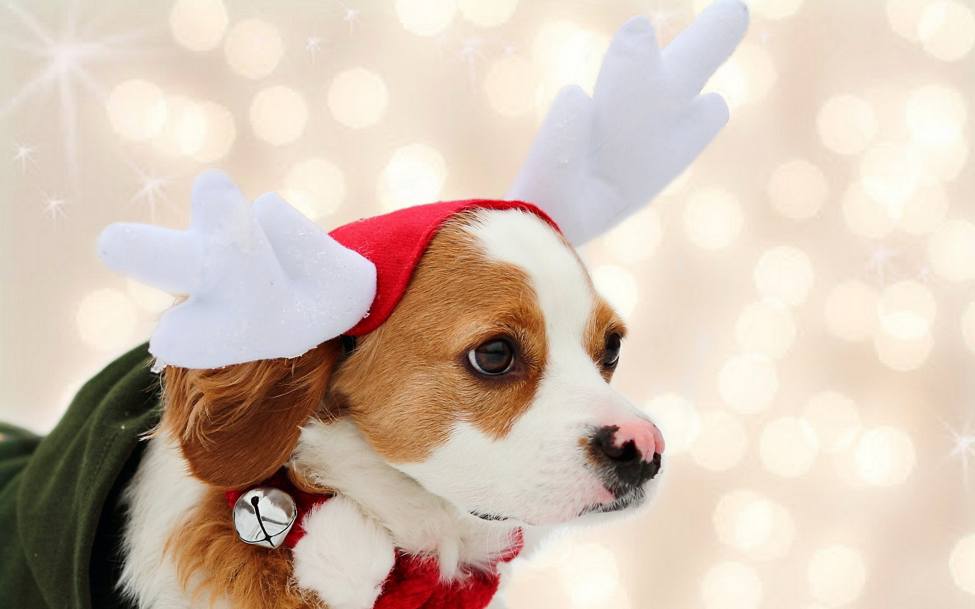 1920x1200 Christmas Wallpapers Dogs