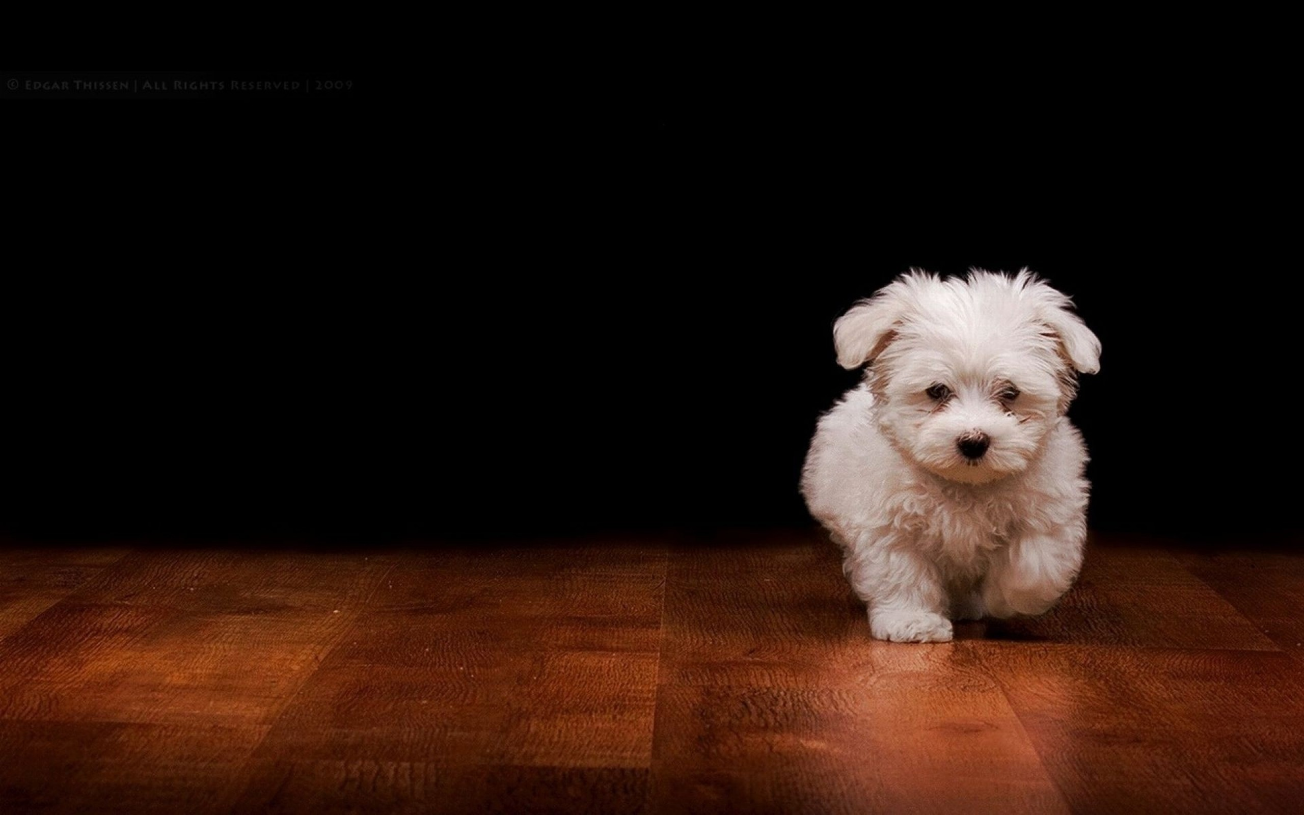 Cool Dogs Wallpapers 60 Images