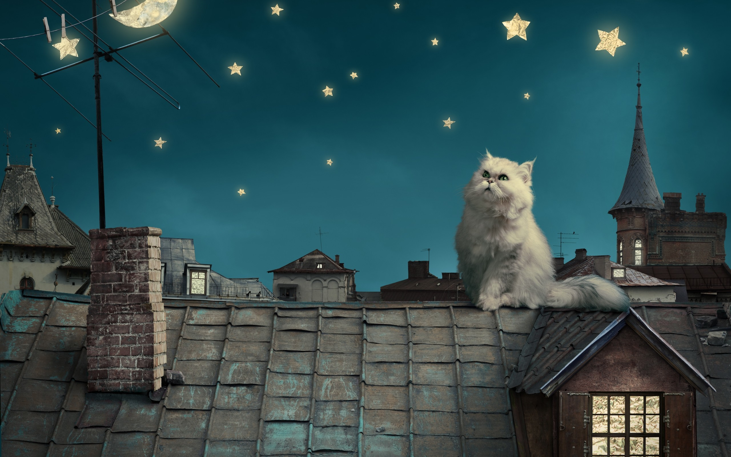 2560x1600 Persian white cat kitten Fairytale fantasy roof house sky night stars moon  cities fantasy wallpaper |  | 55916 | WallpaperUP