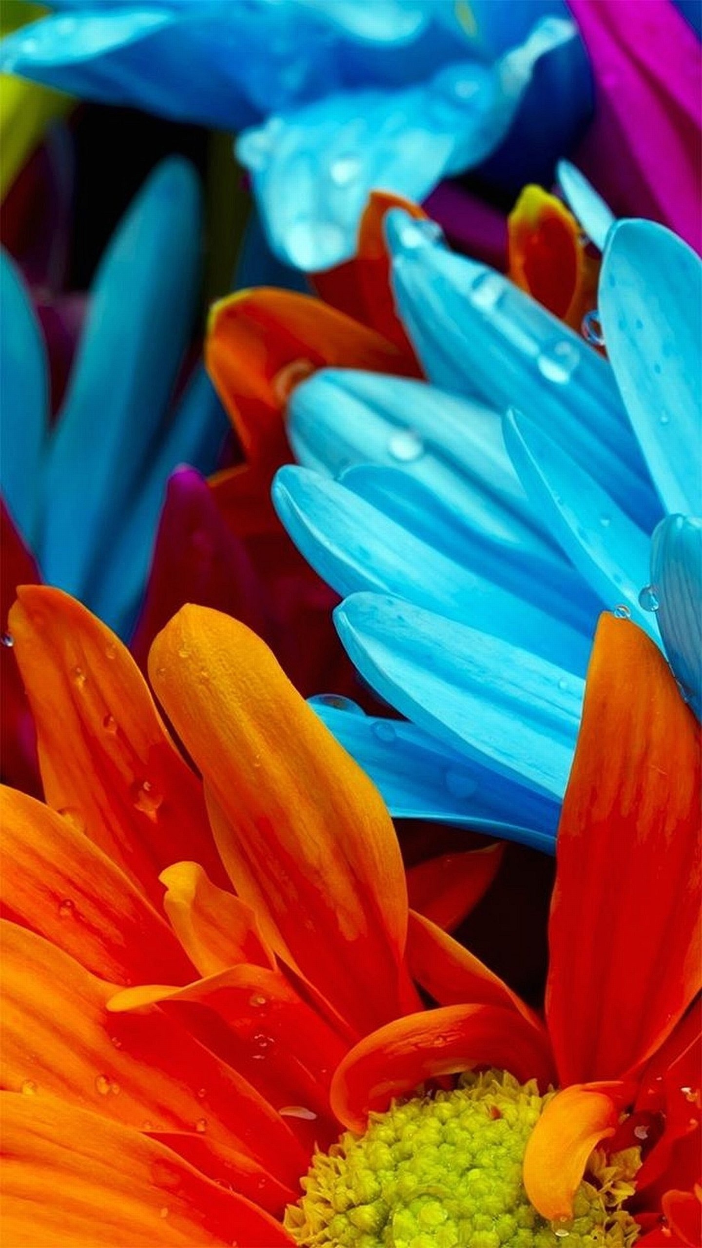 Colorful flower wallpapers 77 images - Art wallpaper 2160x3840 ...