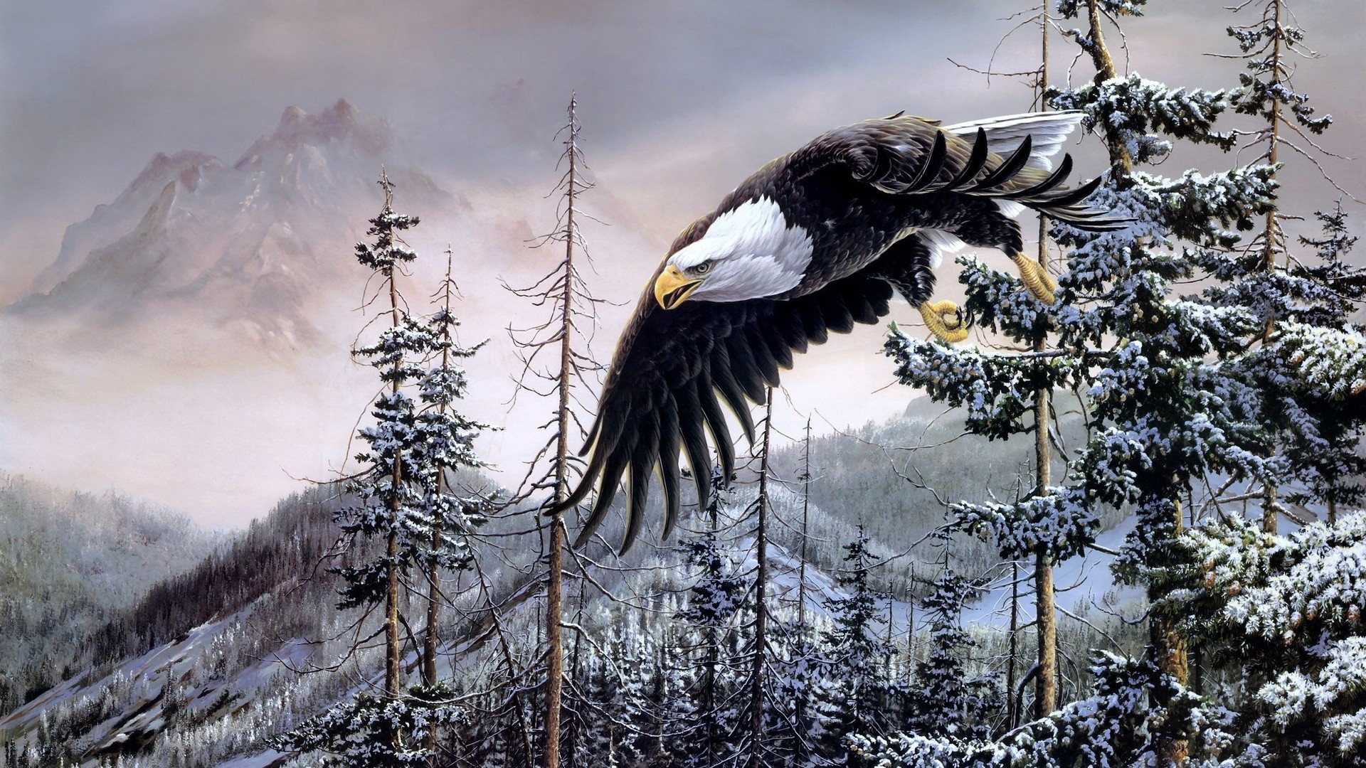 1920x1080 Bald Eagle HD Wallpaper  Bald ...