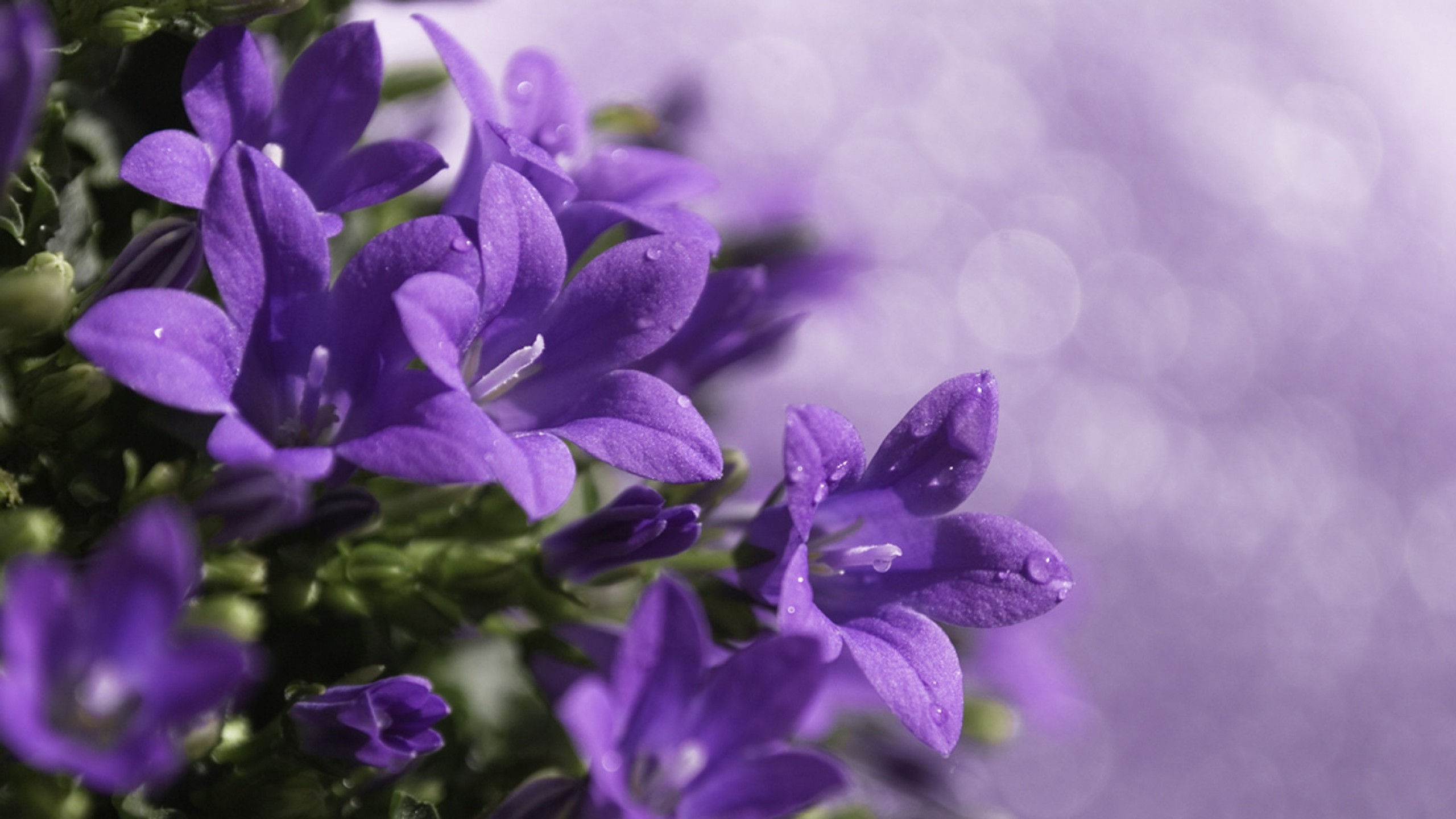Purple Flower Background (66+ images)