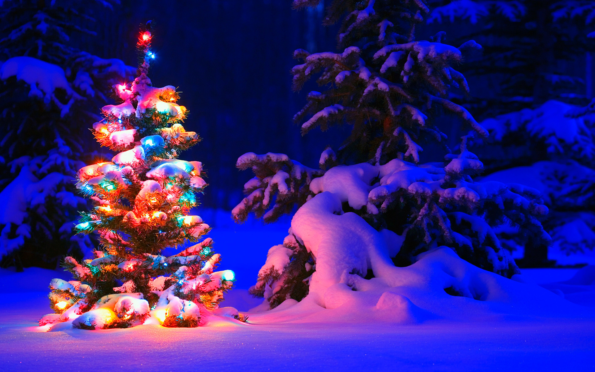 1920x1200 Snowy Christmas Tree Lights