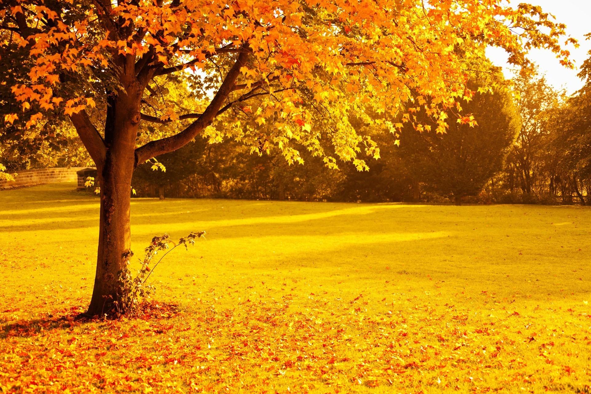 Fall Leaves Desktop Wallpaper