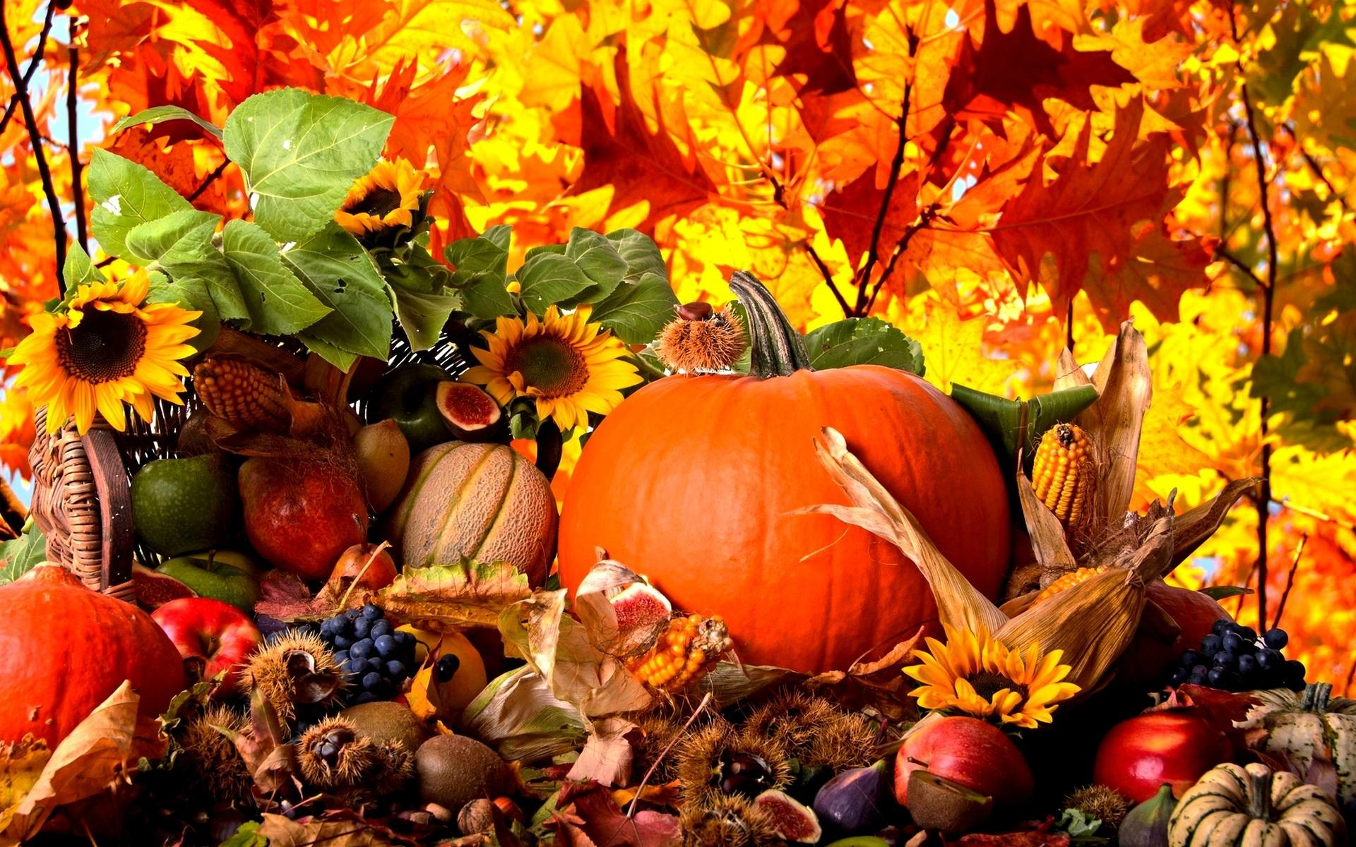 Fall Scene Wallpaper With Pumpkins 52 Images