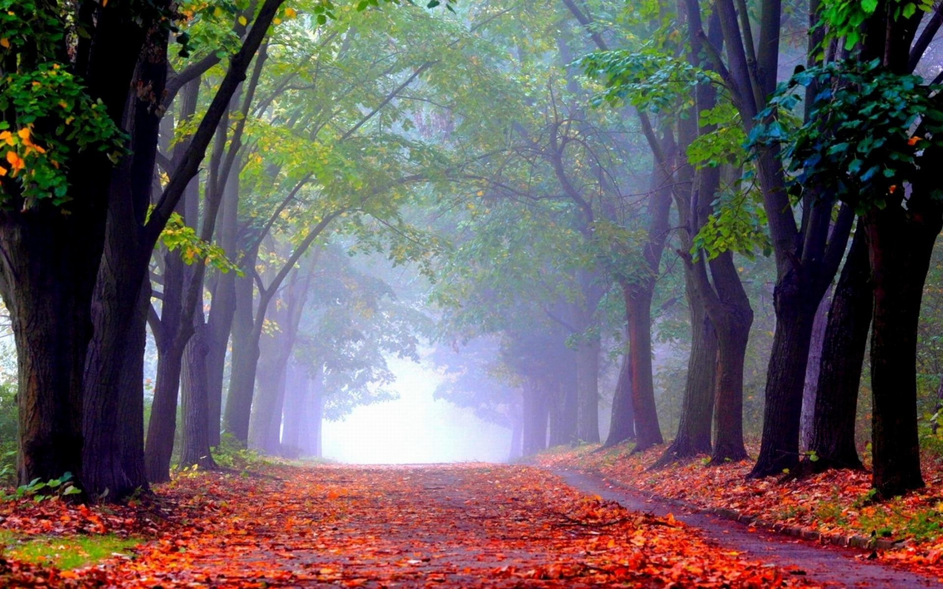 Foggy Forest Wallpaper (74+ images)