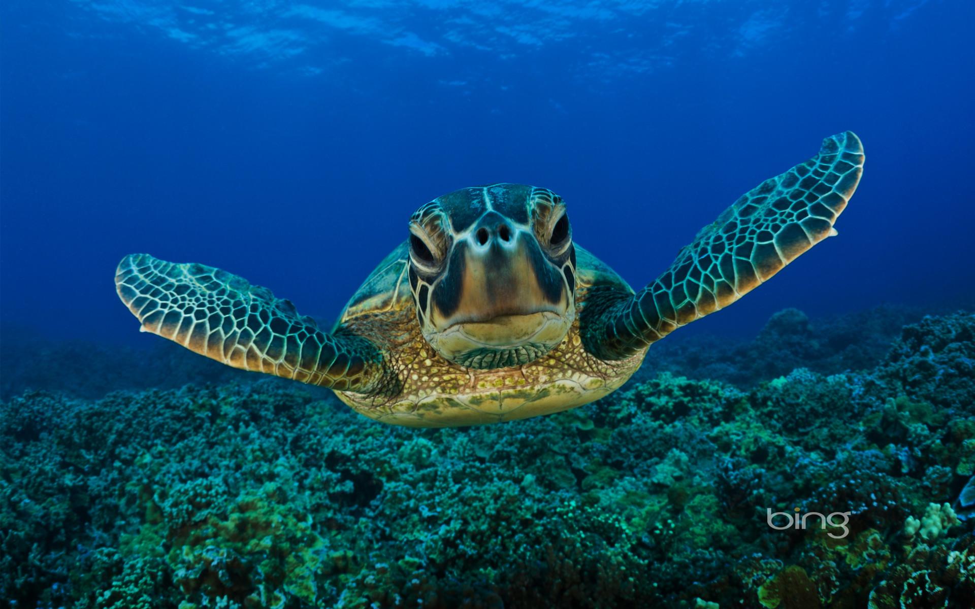 Sea Turtles Desktop Wallpaper (60+ Images