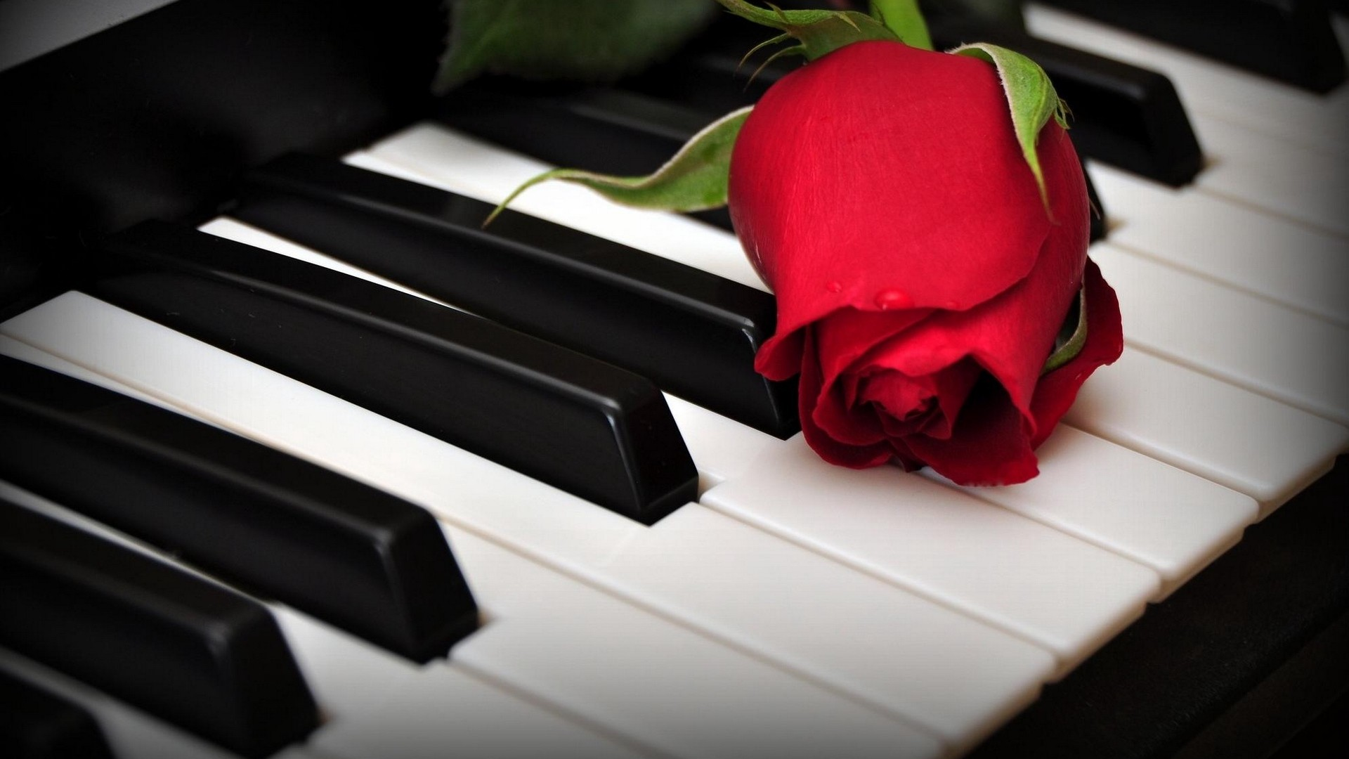1920x1080  Wallpaper rose, flower, keys, piano