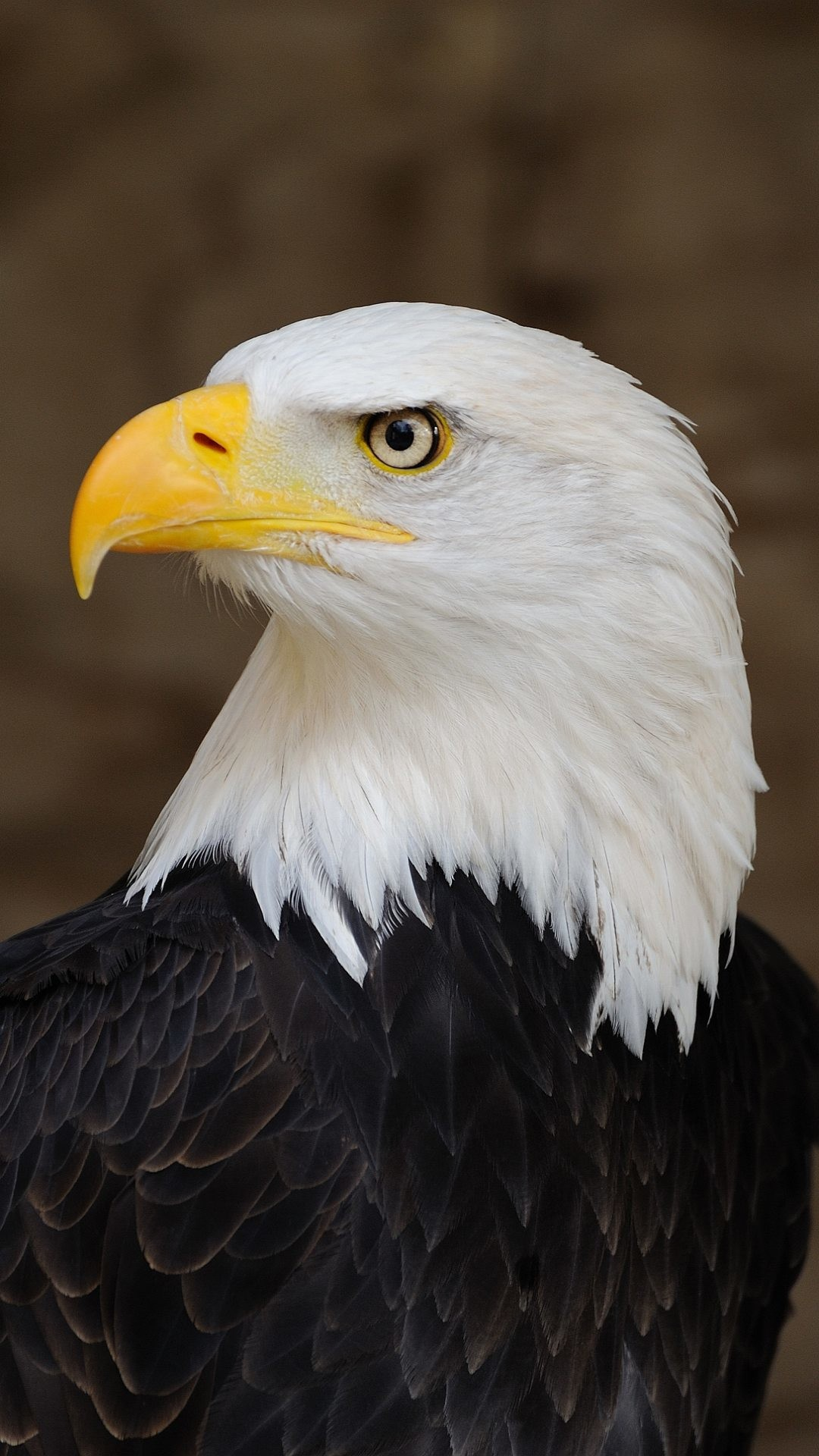 1080x1920 Wallpaper full hd 1080 x 1920 smartphone eagle america symbol
