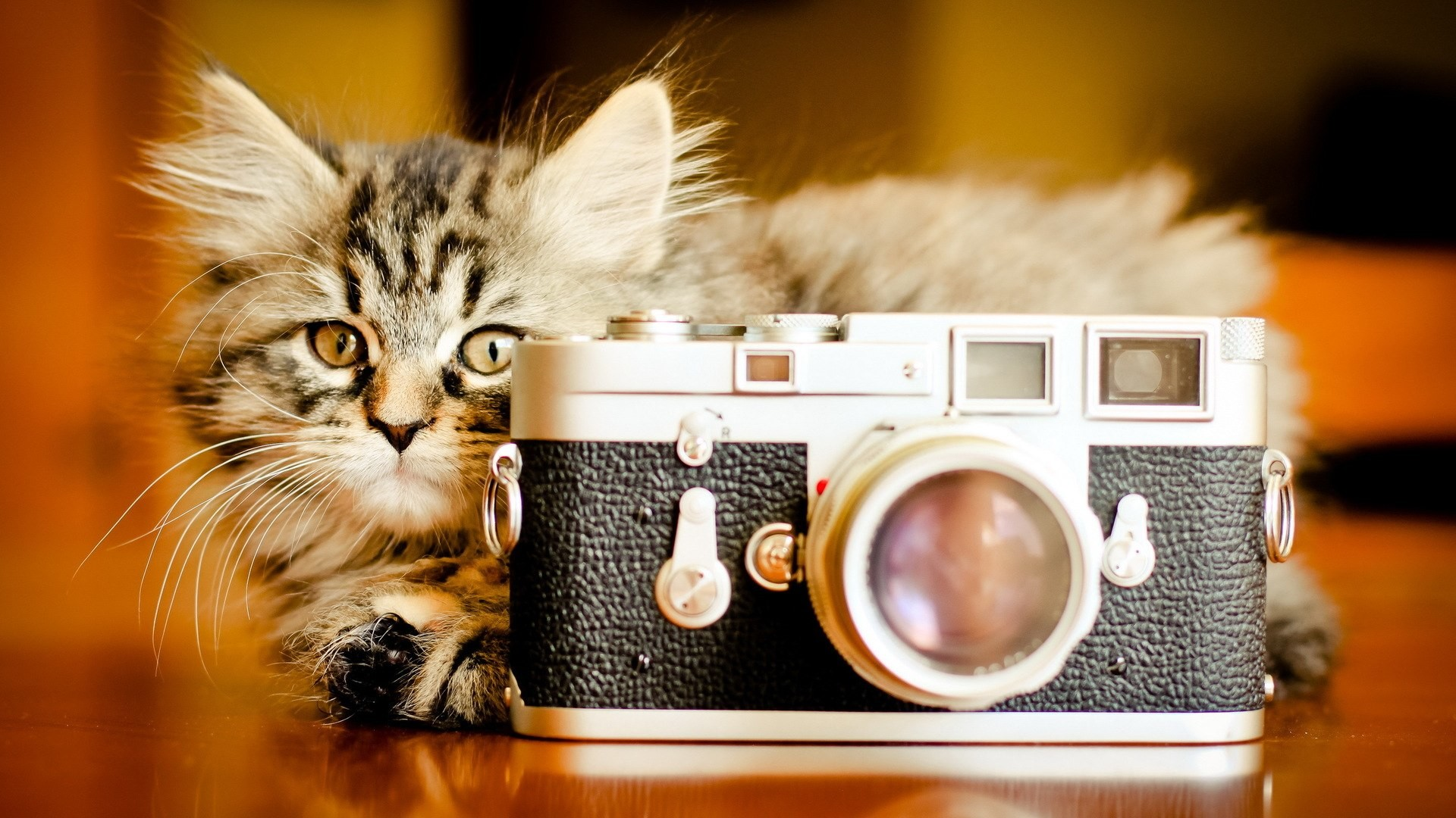 1920x1080 Funny Cat And Camera HD wallpapers - Funny Cat And Camera