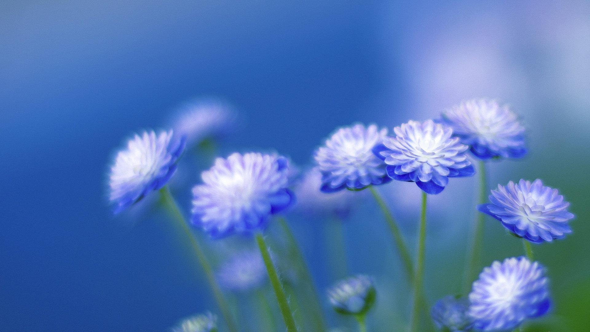 blue flower wallpaper (61+ images)