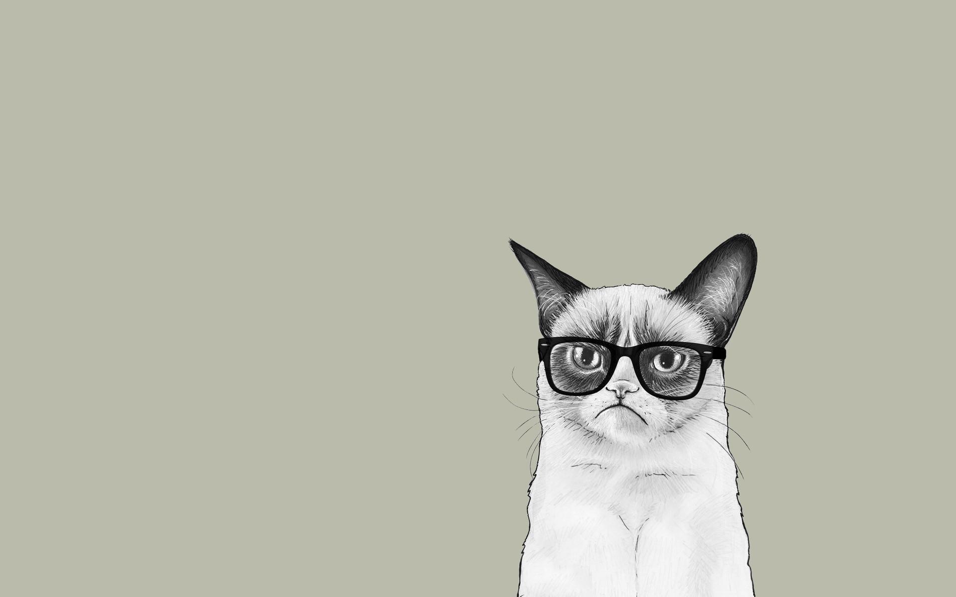2048x1280 Grumpy Cat Wallpapers HD 61 Images
