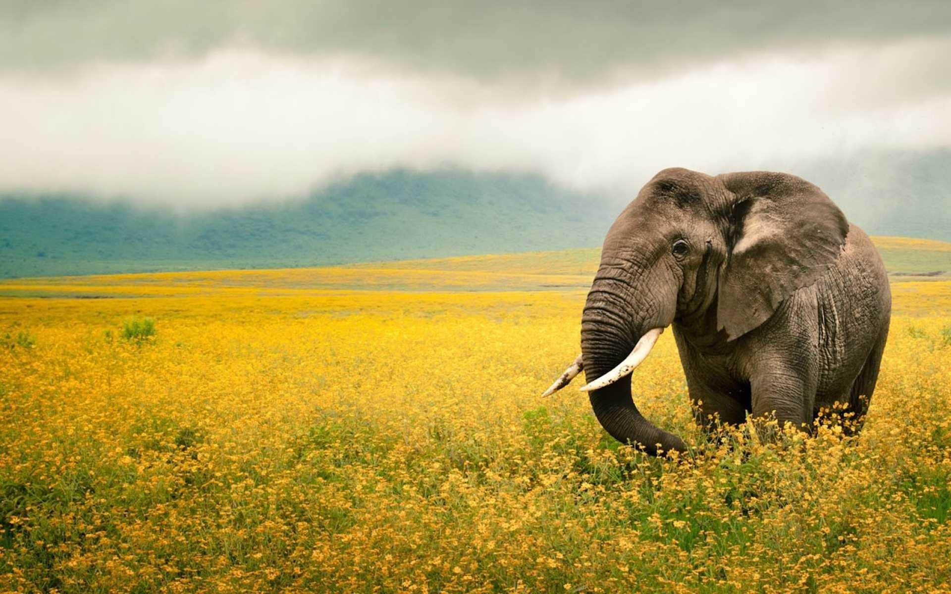 Most Inspiring Wallpaper Cartoon Elephant - 1153564-cool-elephant-iphone-wallpaper-1920x1200  Pictures_743418  .jpg