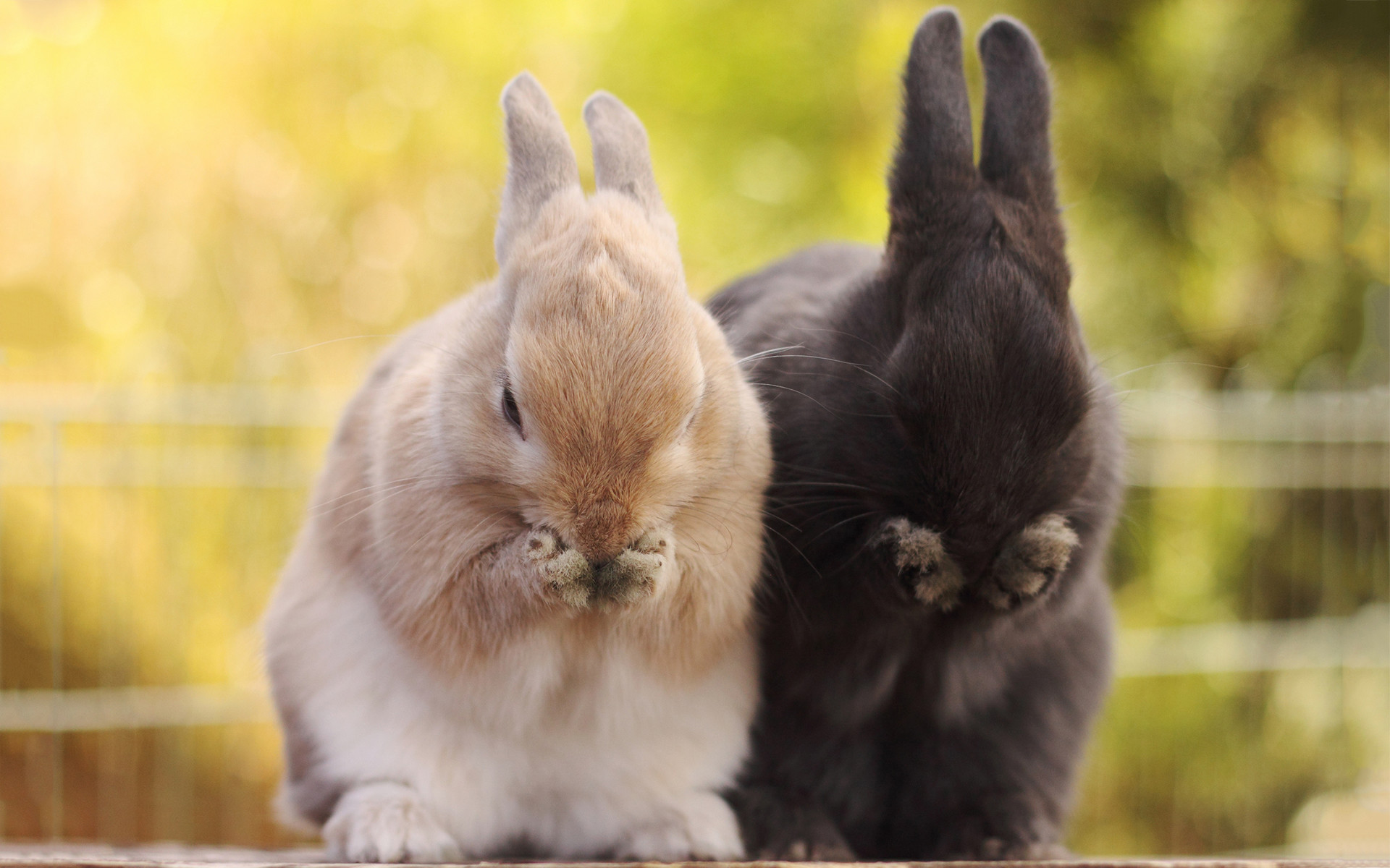 Spring Bunny Wallpaper 61 Images