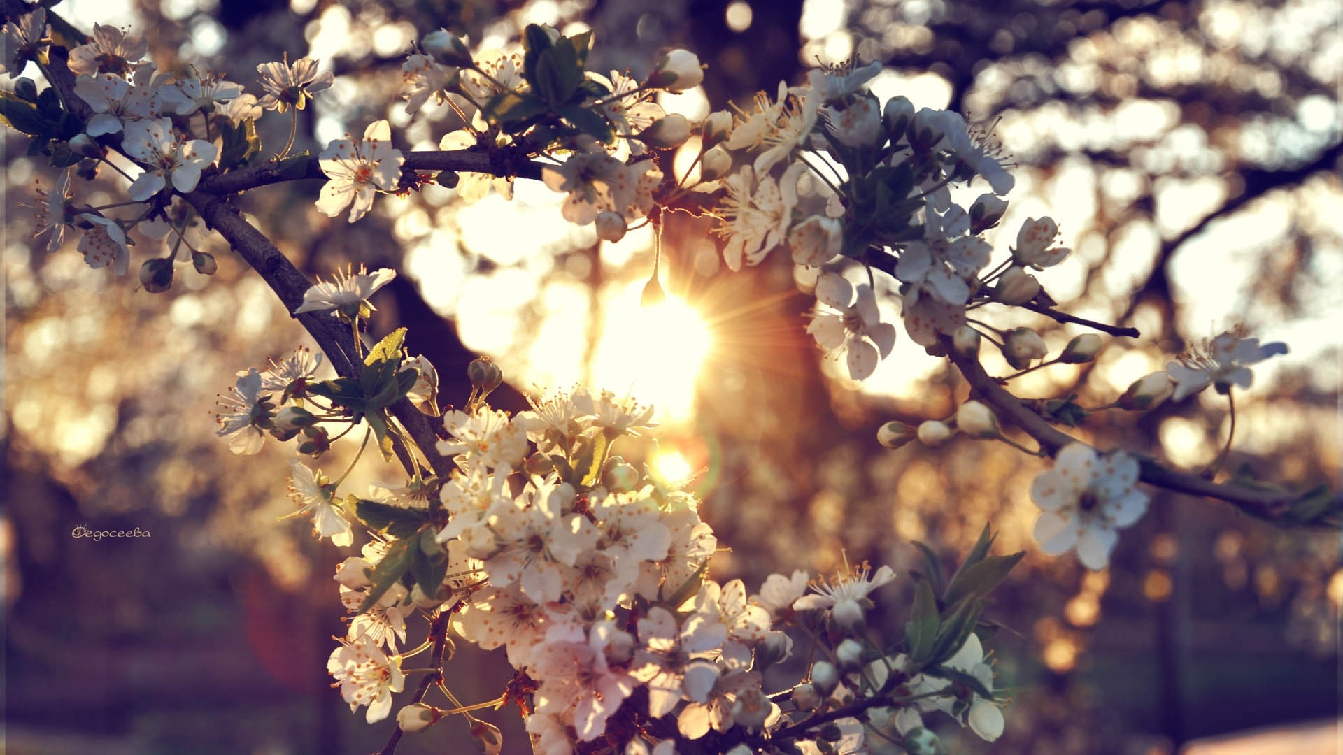 1920x1080 Preview wallpaper branch, flowers, spring