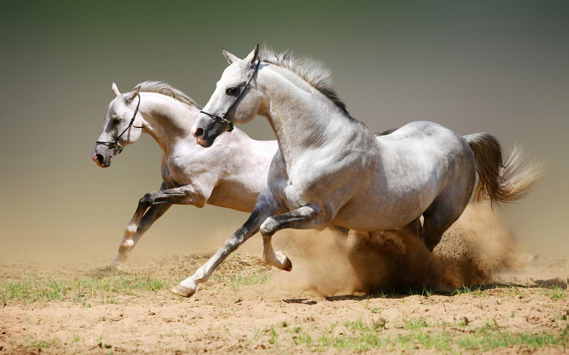 1920x1080 Running Horses Wallpaper