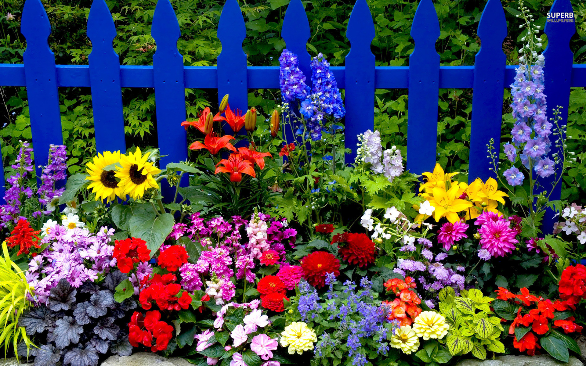 1920x1200 Summer Flower Garden Wallpaper