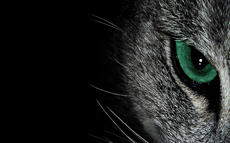 Black Cat Eyes Wallpaper 69 Images