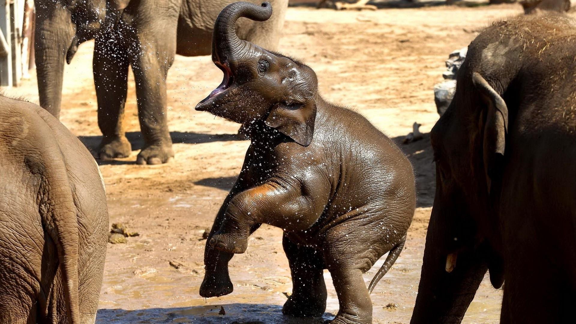 Baby elephants wallpaper - photo#55