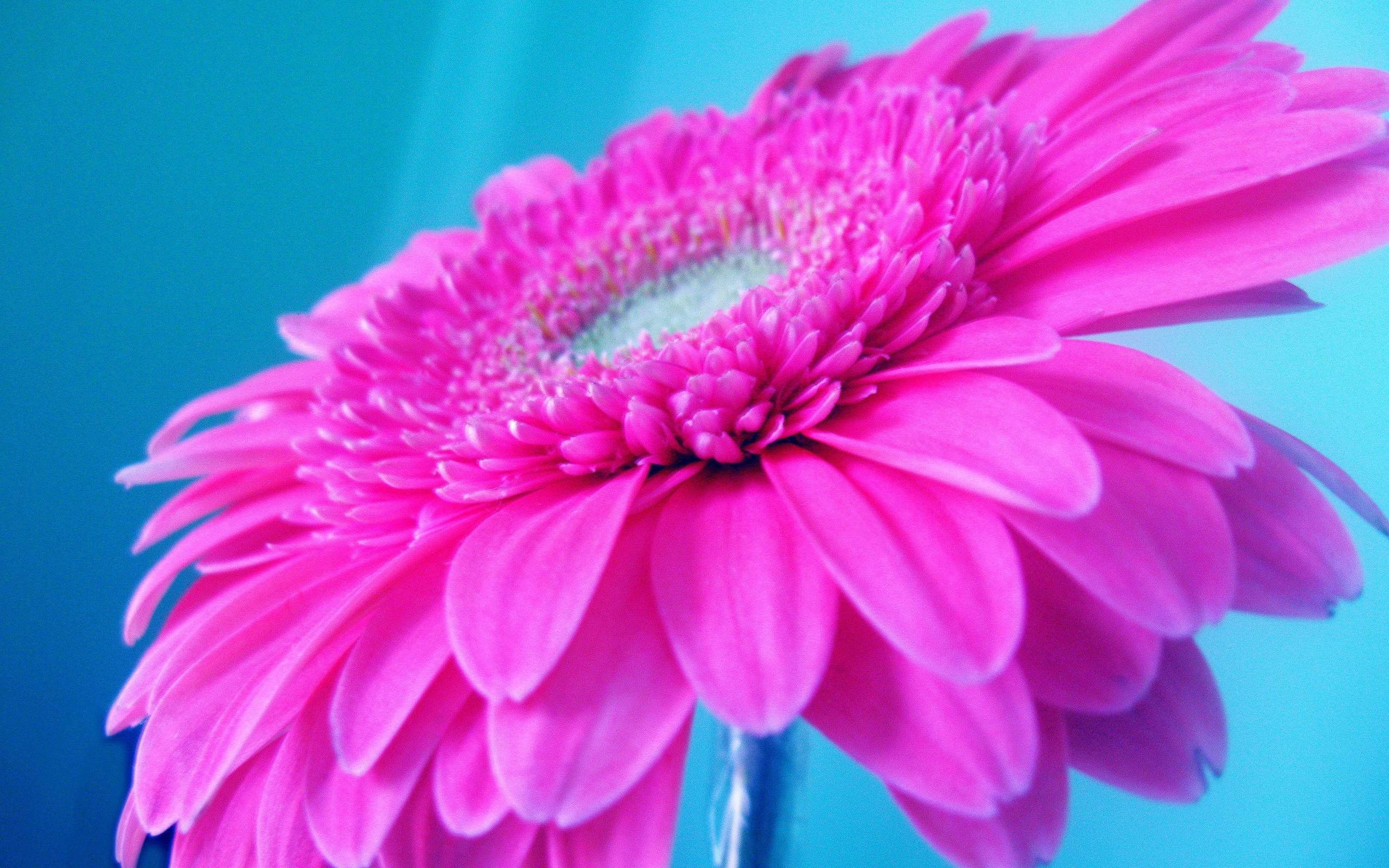 Bright Pink Wallpaper (48+ images)