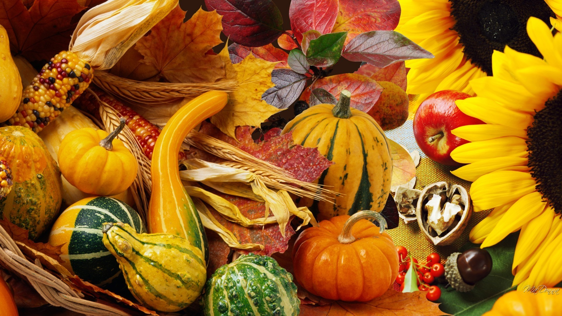 1920x1080 Thanksgiving Tag - Autumn Vegetables Fall Pumpkin Nuts Leaves Garden Apples  Harvest Squash Sunflowers Acorns Gourds