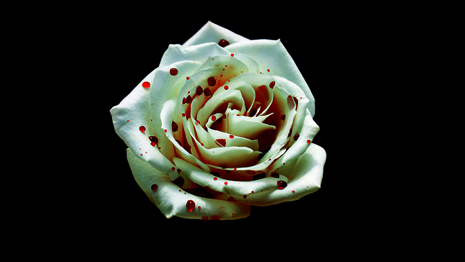 Bloody Rose Wallpaper (60+ images)