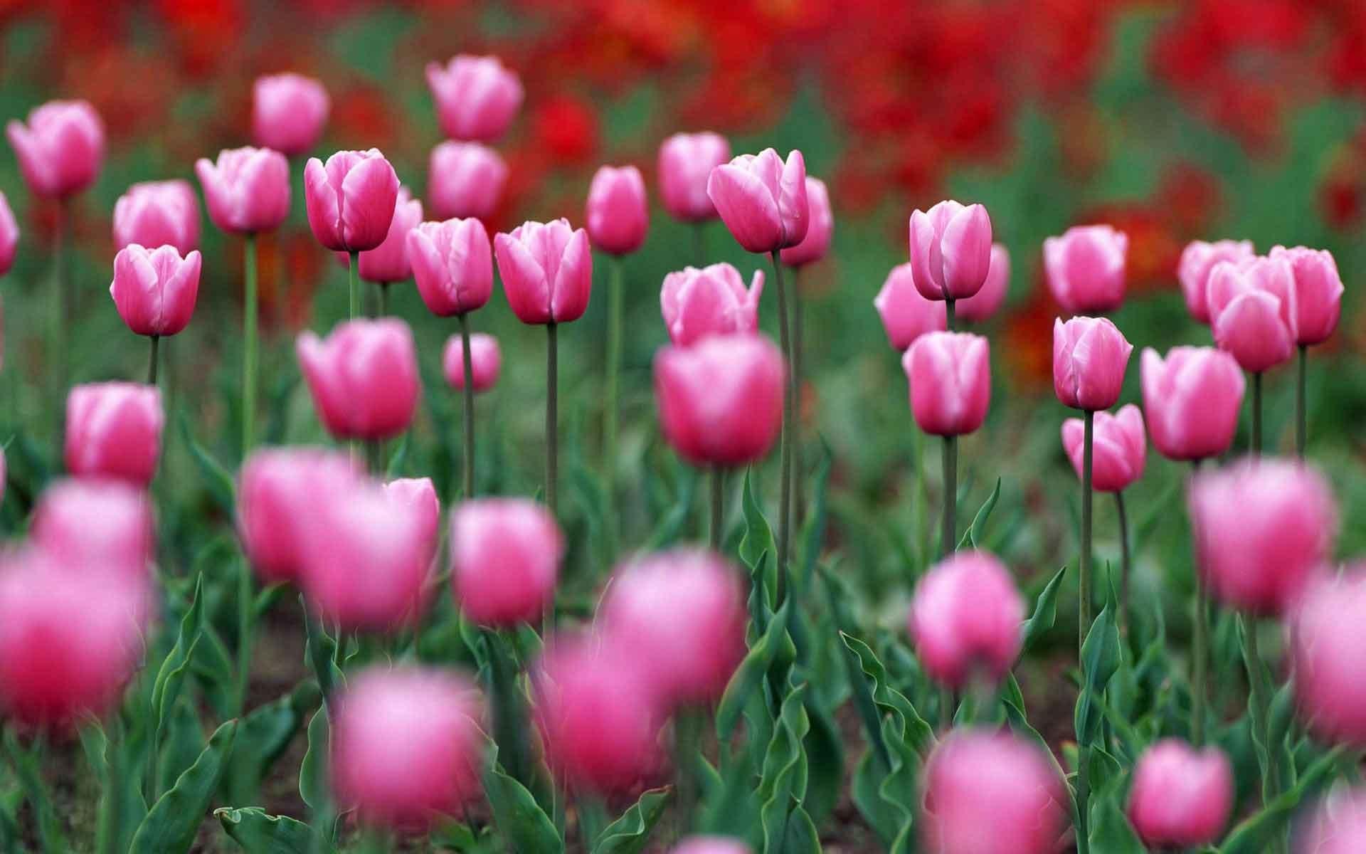 Free Colorful Flower Wallpaper Downloads: Spring Desktop Backgrounds (72+ Images