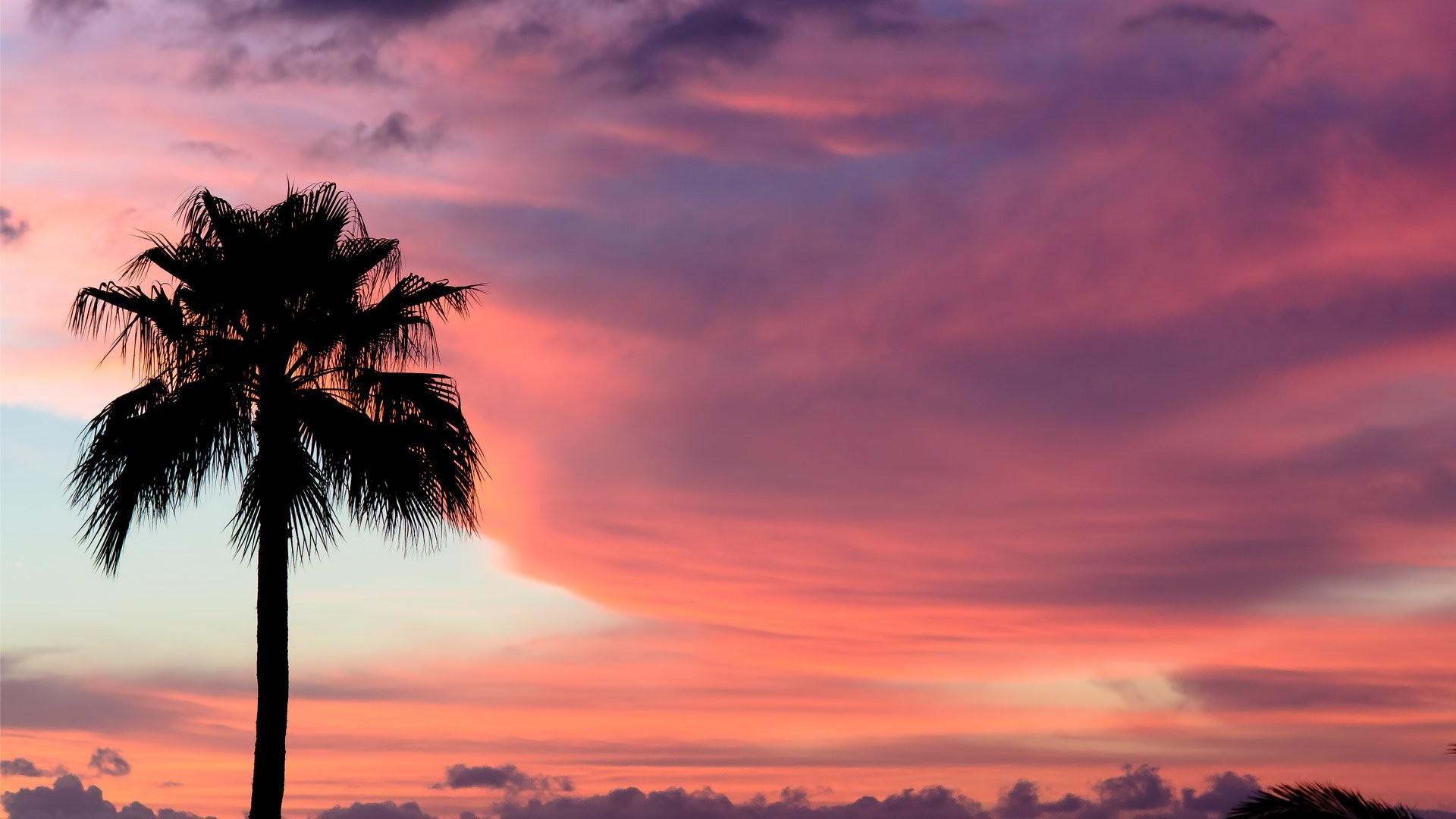 Palm tree desktop wallpaper 72 images - Free palm tree screensavers ...
