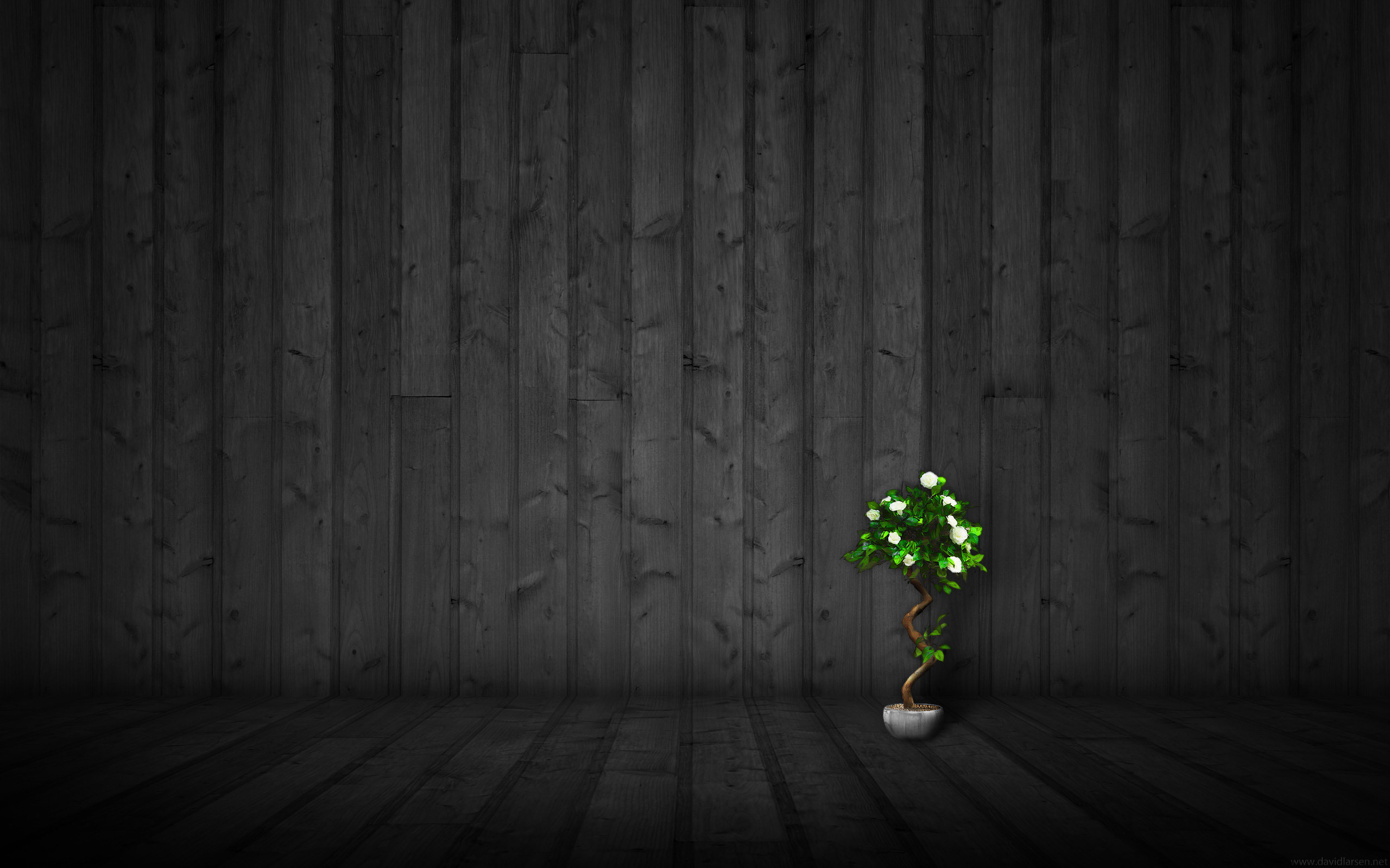 2560x1600 Miraculous Wood Grain Wall For Covering And Wallpaper Borders
