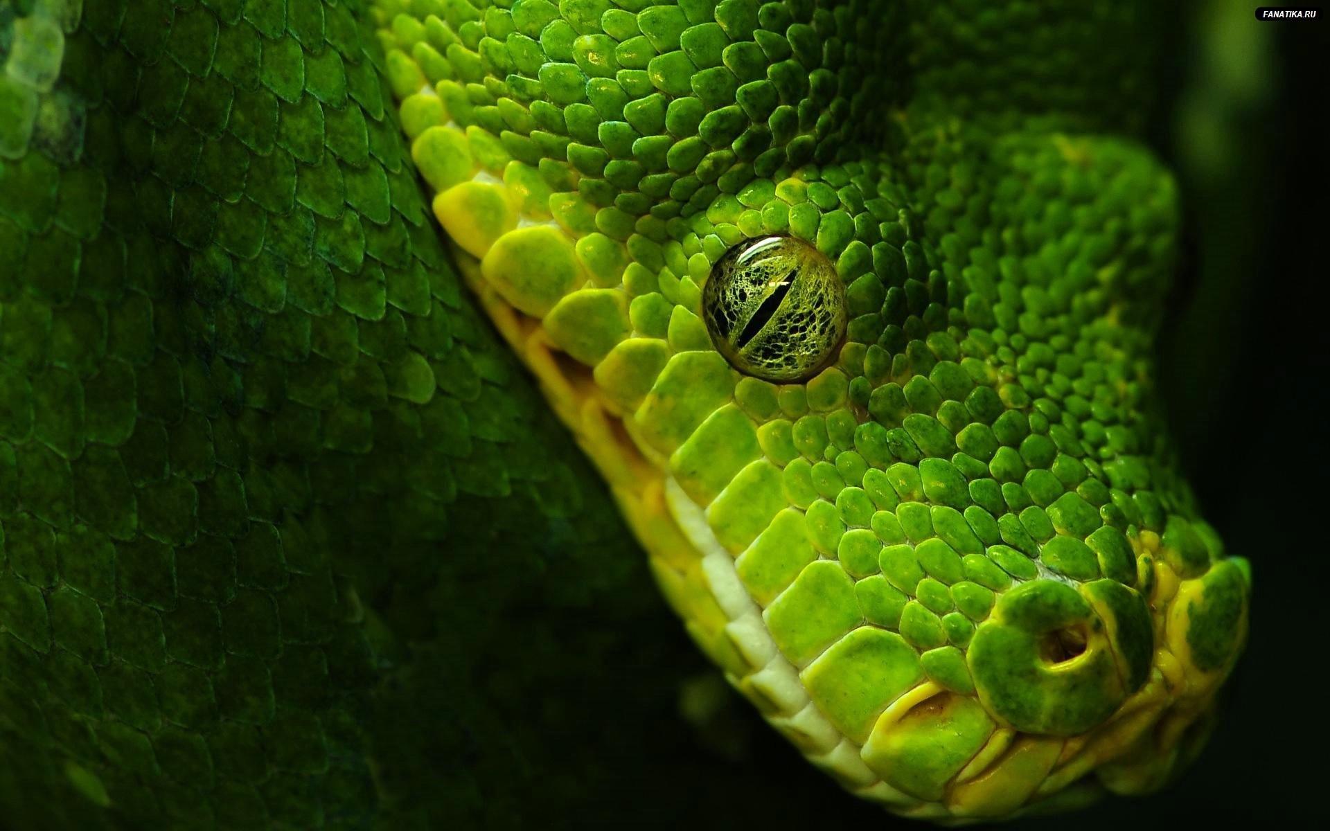 1920x1080 3d Animation Snake