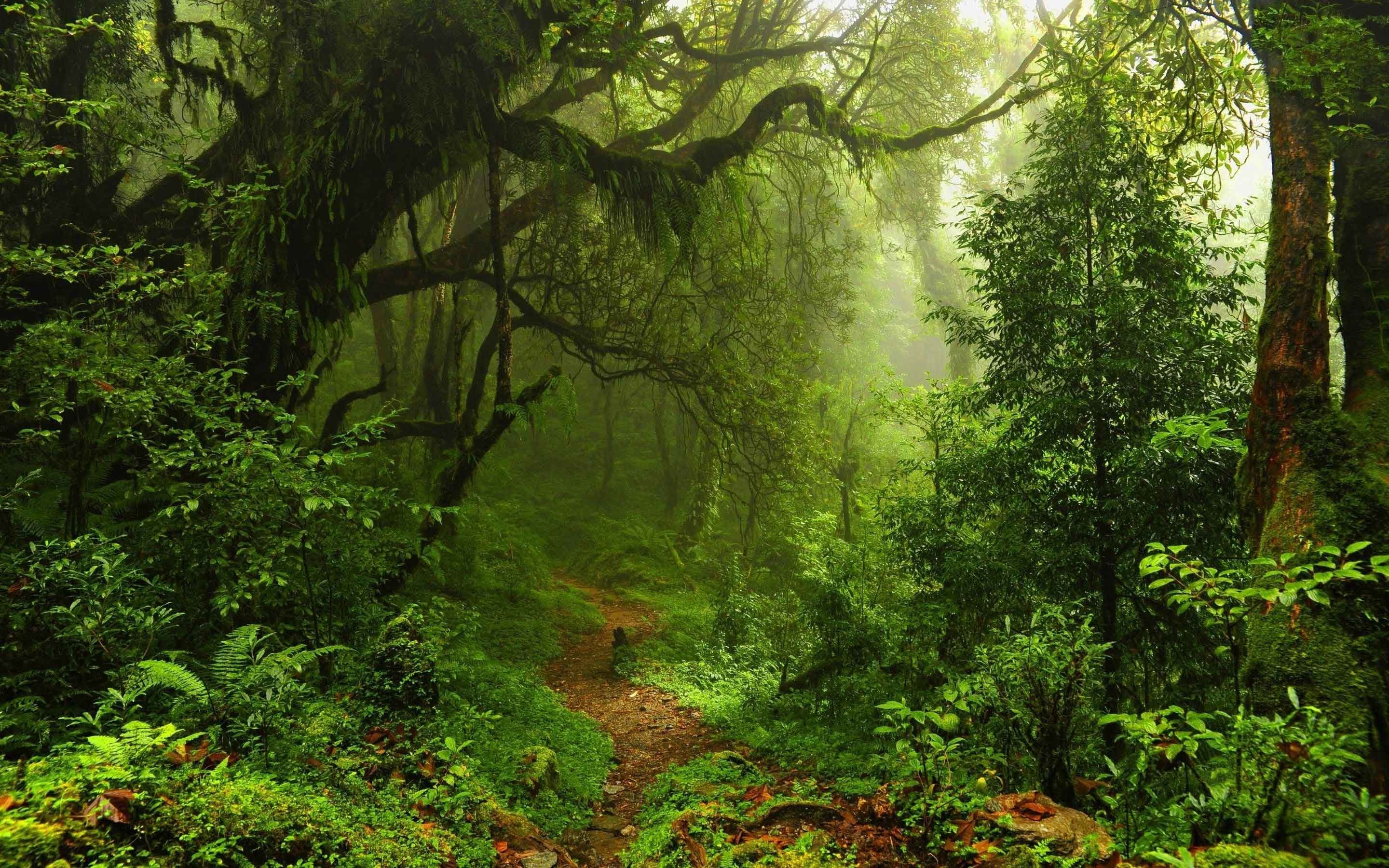 Rainforest Wallpaper (61+ Images