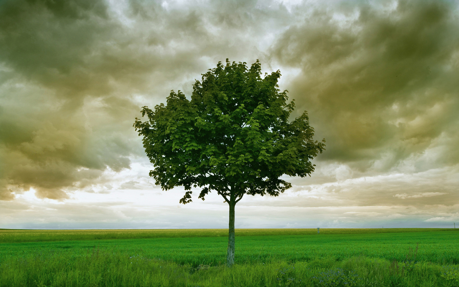 1920x1200 Tree Grass Field Stormy Sky wallpapers and stock photos