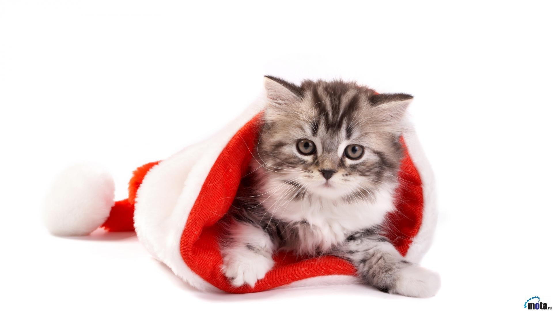 1920x1080 Images For > Christmas Cat Wallpaper Desktop